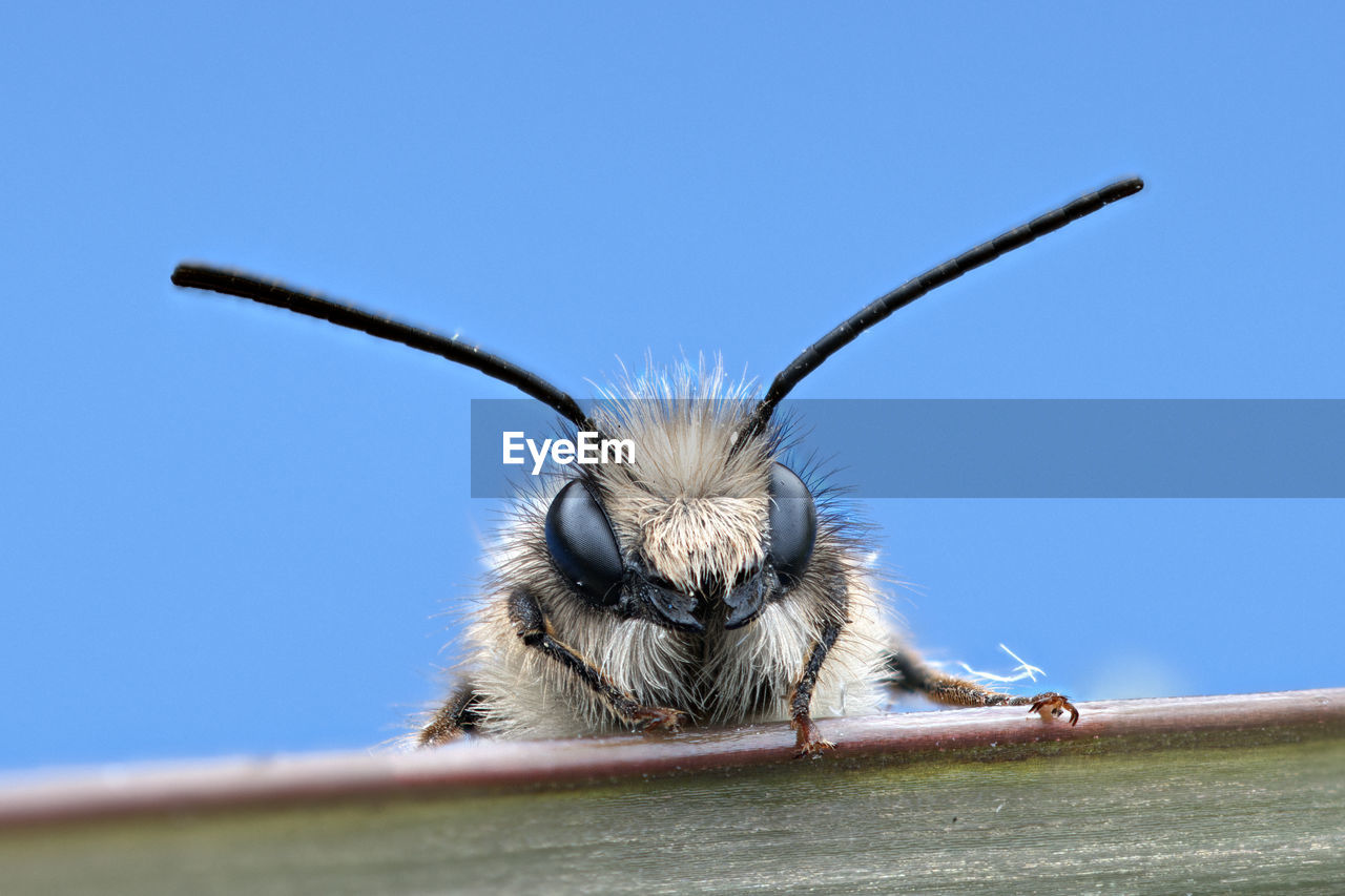 one animal, sky, animal themes, animal wildlife, animals in the wild, clear sky, animal, close-up, day, blue, no people, mammal, nature, vertebrate, invertebrate, animal body part, outdoors, copy space, low angle view, insect, animal head, whisker