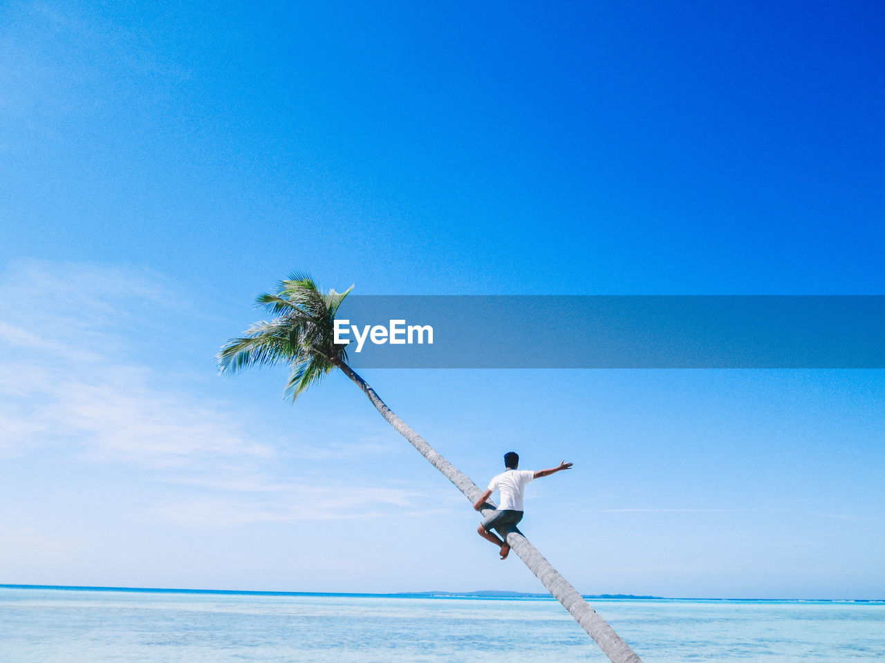 LOW ANGLE VIEW OF PALM TREE BY SEA AGAINST SKY