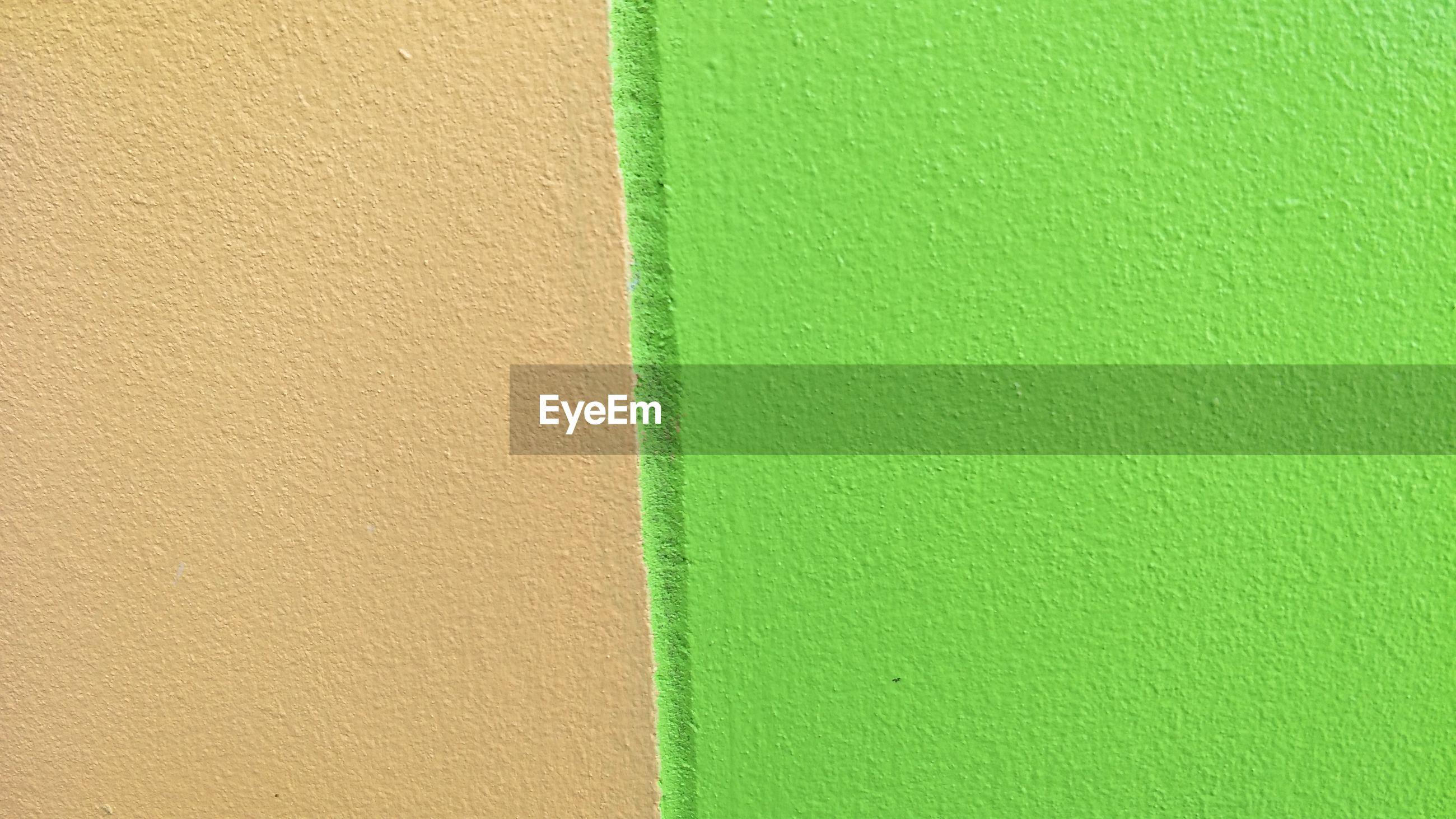 CLOSE-UP OF GREEN WALL