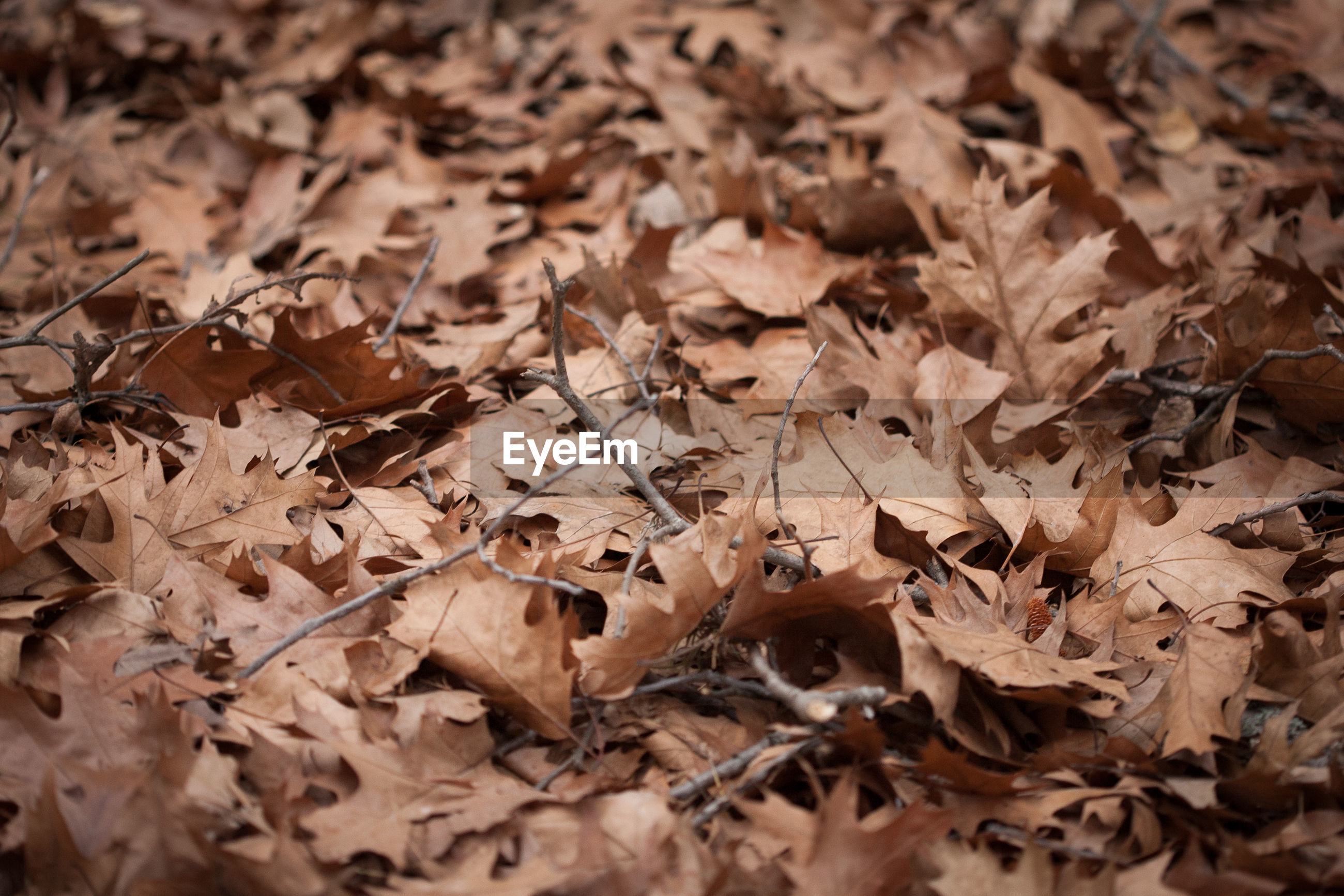Full frame shot of dry fallen leaves