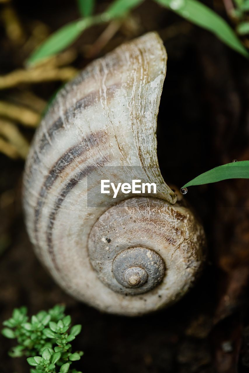 animal wildlife, animal, close-up, plant, gastropod, animal themes, animals in the wild, mollusk, snail, invertebrate, one animal, no people, nature, beauty in nature, growth, spiral, shell, focus on foreground, plant part, leaf, outdoors