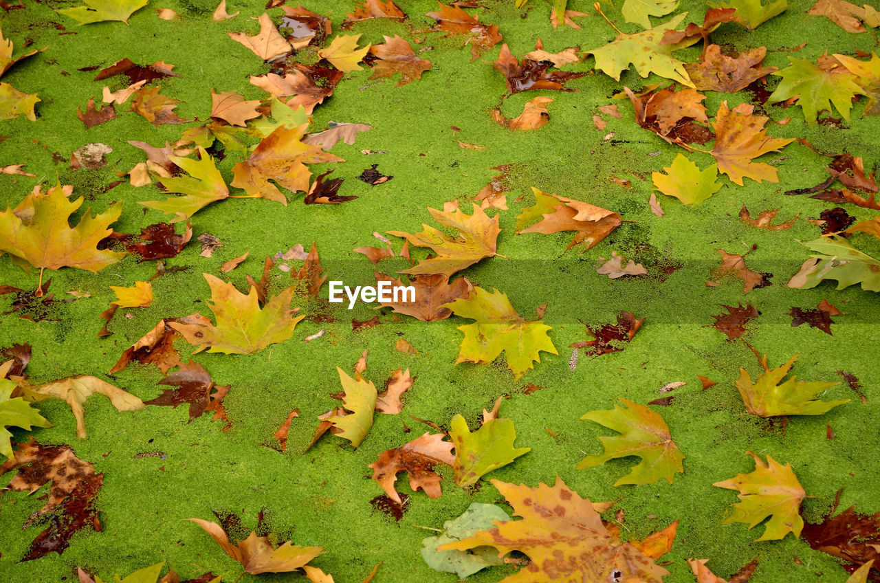 Fallen Leaves On Field