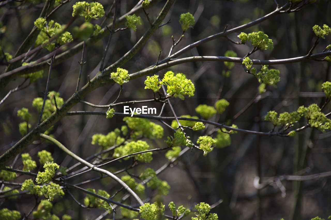 growth, plant, focus on foreground, beauty in nature, no people, nature, day, green color, plant part, leaf, close-up, tree, freshness, outdoors, flower, vulnerability, fragility, flowering plant, selective focus, branch