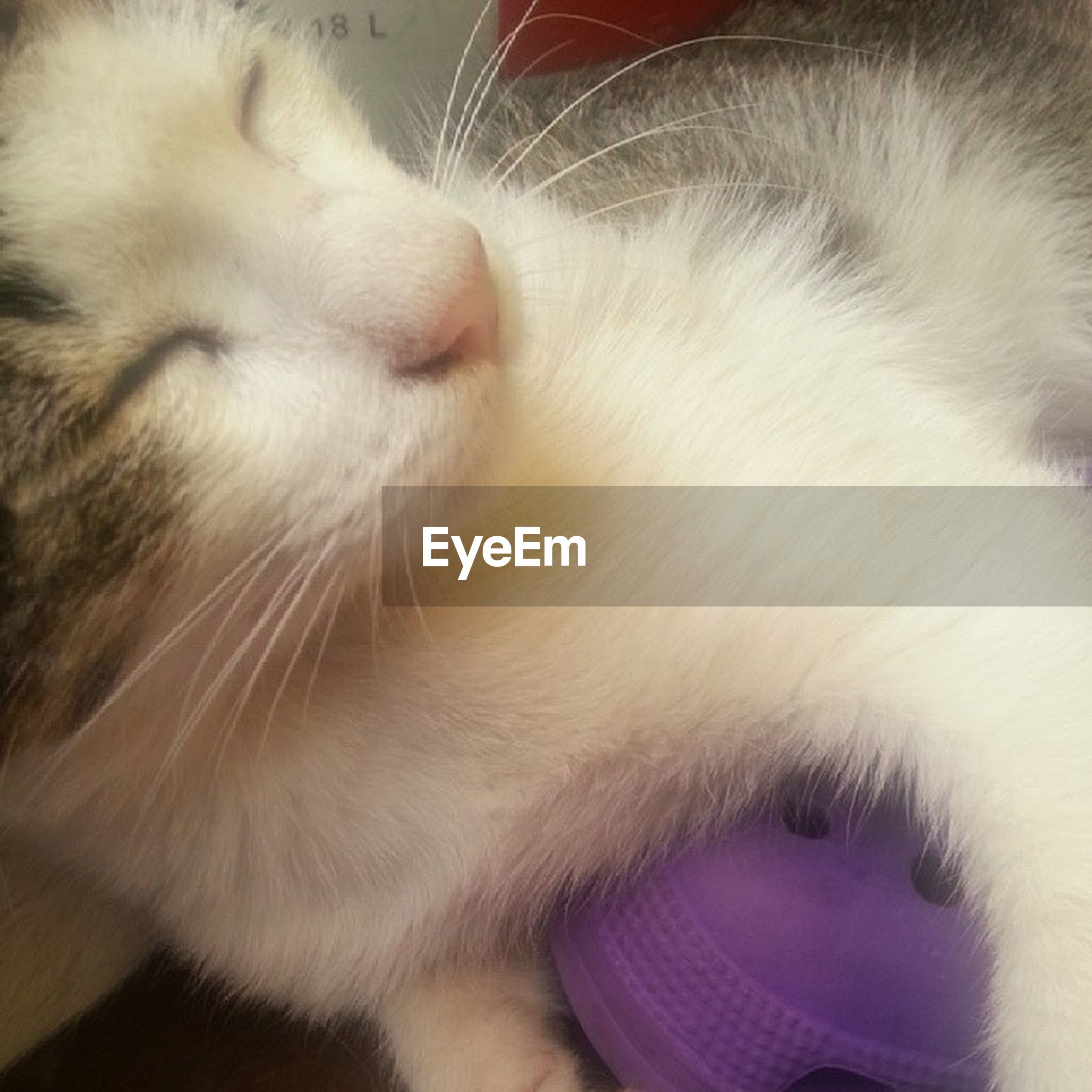 domestic animals, pets, domestic cat, mammal, cat, one animal, animal themes, indoors, feline, whisker, close-up, relaxation, sleeping, animal head, resting, eyes closed, animal body part, lying down, white color, no people