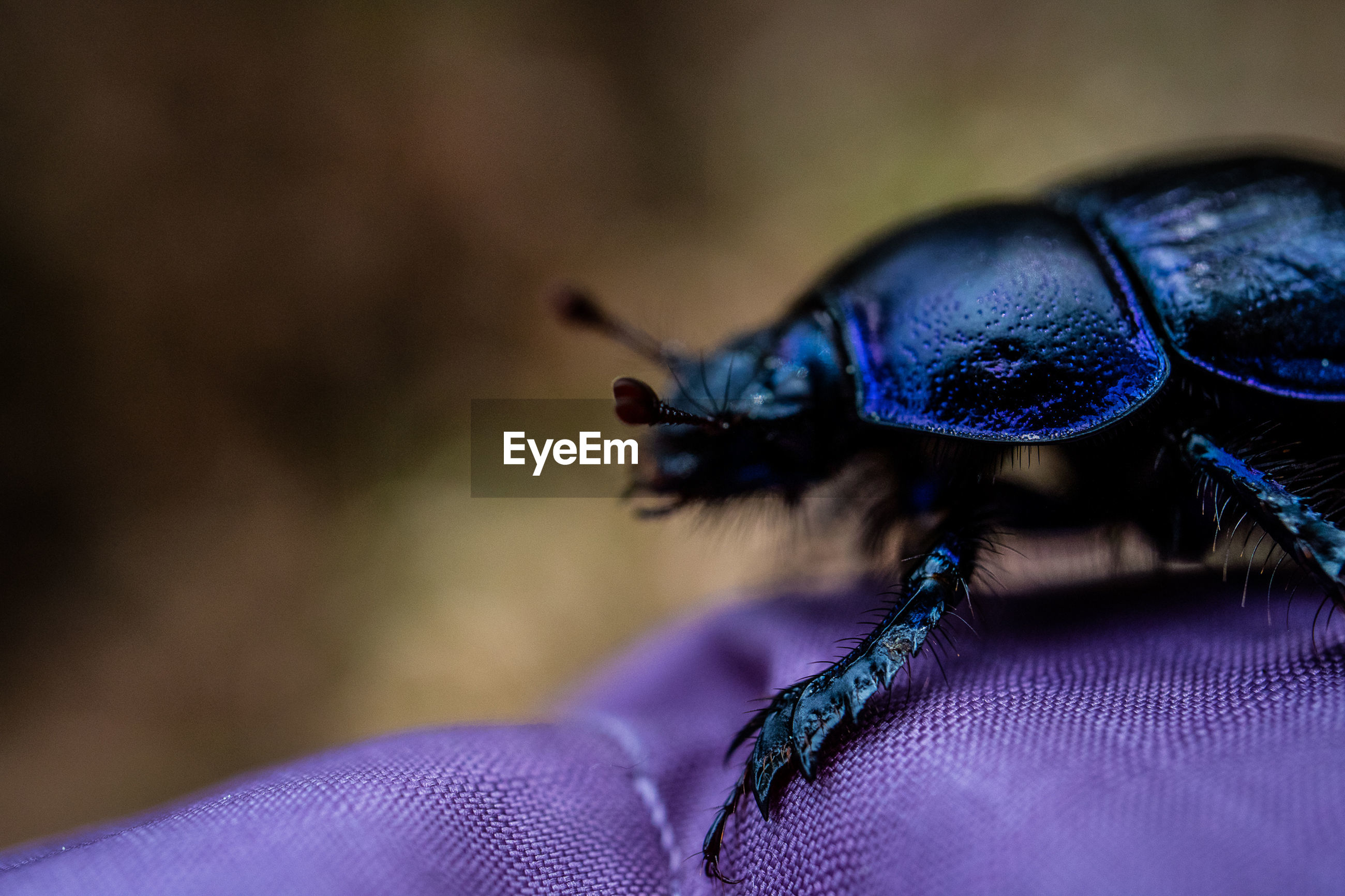 CLOSE-UP OF INSECT ON PURPLE BLUE CURTAIN