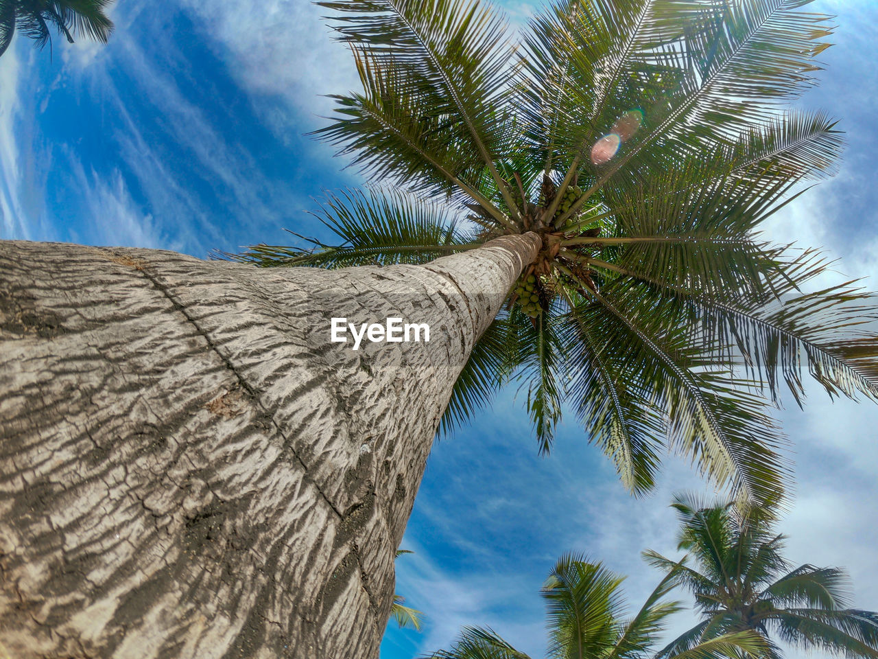 palm tree, tropical climate, tree, sky, plant, nature, no people, low angle view, trunk, tree trunk, cloud - sky, growth, palm leaf, beauty in nature, day, coconut palm tree, blue, leaf, outdoors, tropical tree, directly below, leaves