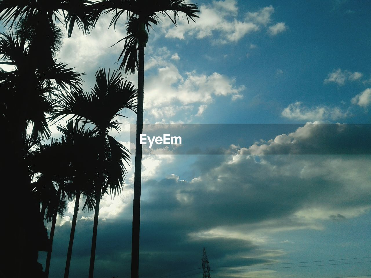 cloud - sky, tree, sky, palm tree, tropical climate, plant, beauty in nature, nature, no people, low angle view, tranquility, day, outdoors, silhouette, growth, tranquil scene, tree trunk, scenics - nature, trunk, tropical tree, coconut palm tree, palm leaf