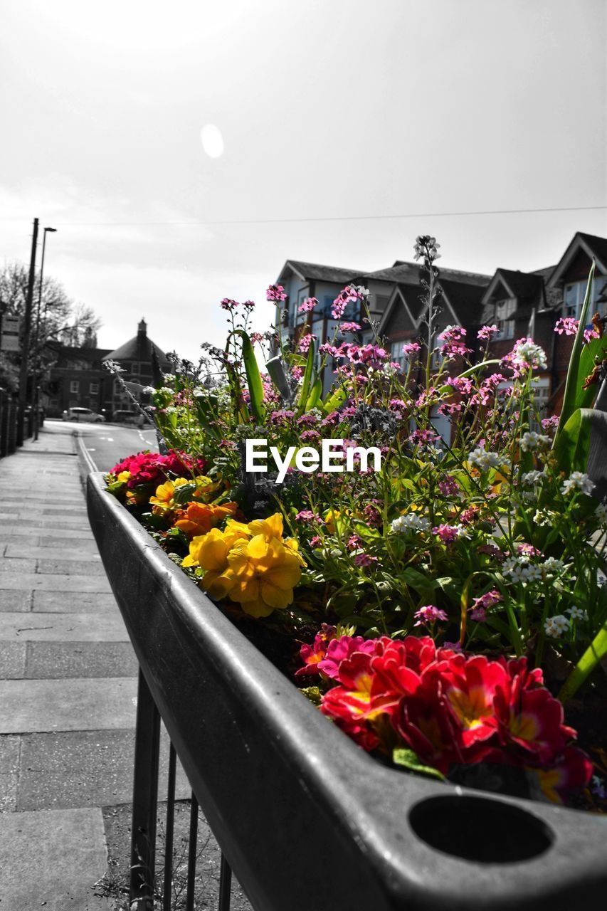 flower, flowering plant, plant, vulnerability, freshness, fragility, nature, beauty in nature, sky, growth, multi colored, petal, close-up, no people, day, flower head, outdoors, potted plant, architecture, inflorescence, flower pot, flowerbed