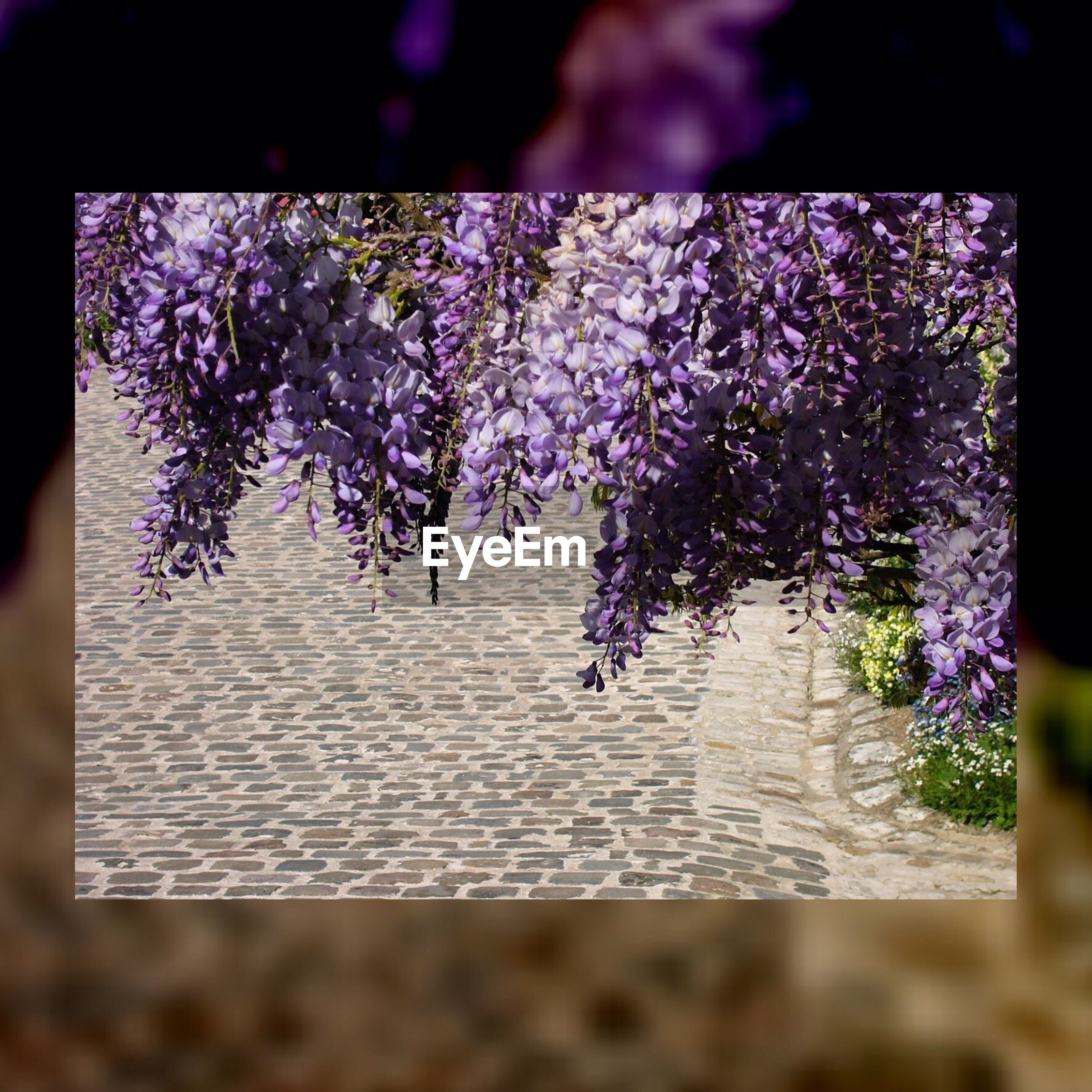 flower, freshness, purple, growth, fragility, beauty in nature, nature, petal, selective focus, plant, blooming, in bloom, close-up, blossom, auto post production filter, focus on foreground, botany, day, no people, outdoors