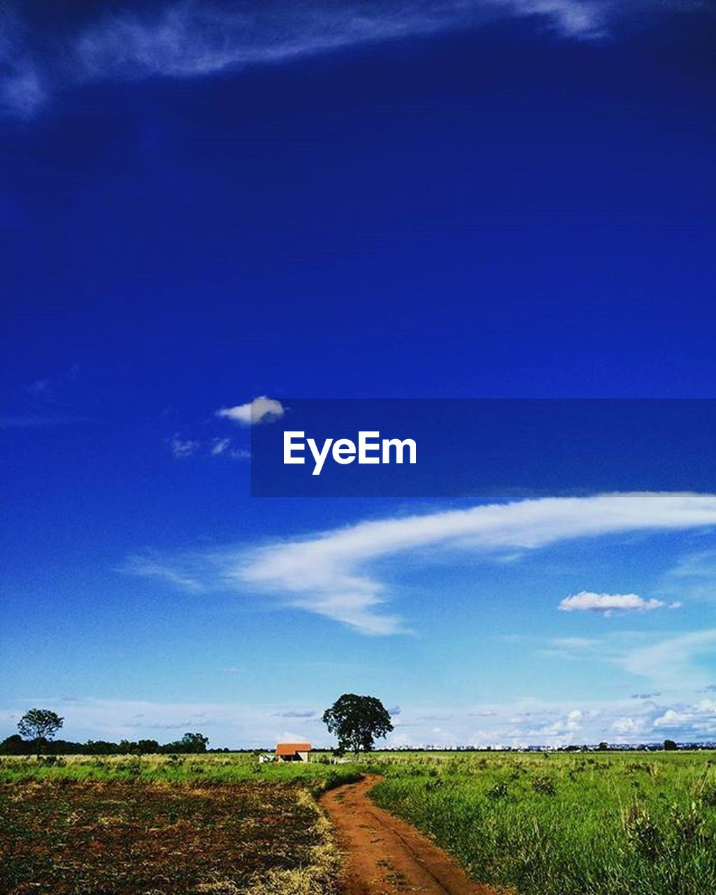 sky, plant, cloud - sky, landscape, land, blue, environment, field, scenics - nature, tranquil scene, beauty in nature, tranquility, tree, nature, growth, no people, day, grass, green color, non-urban scene, outdoors