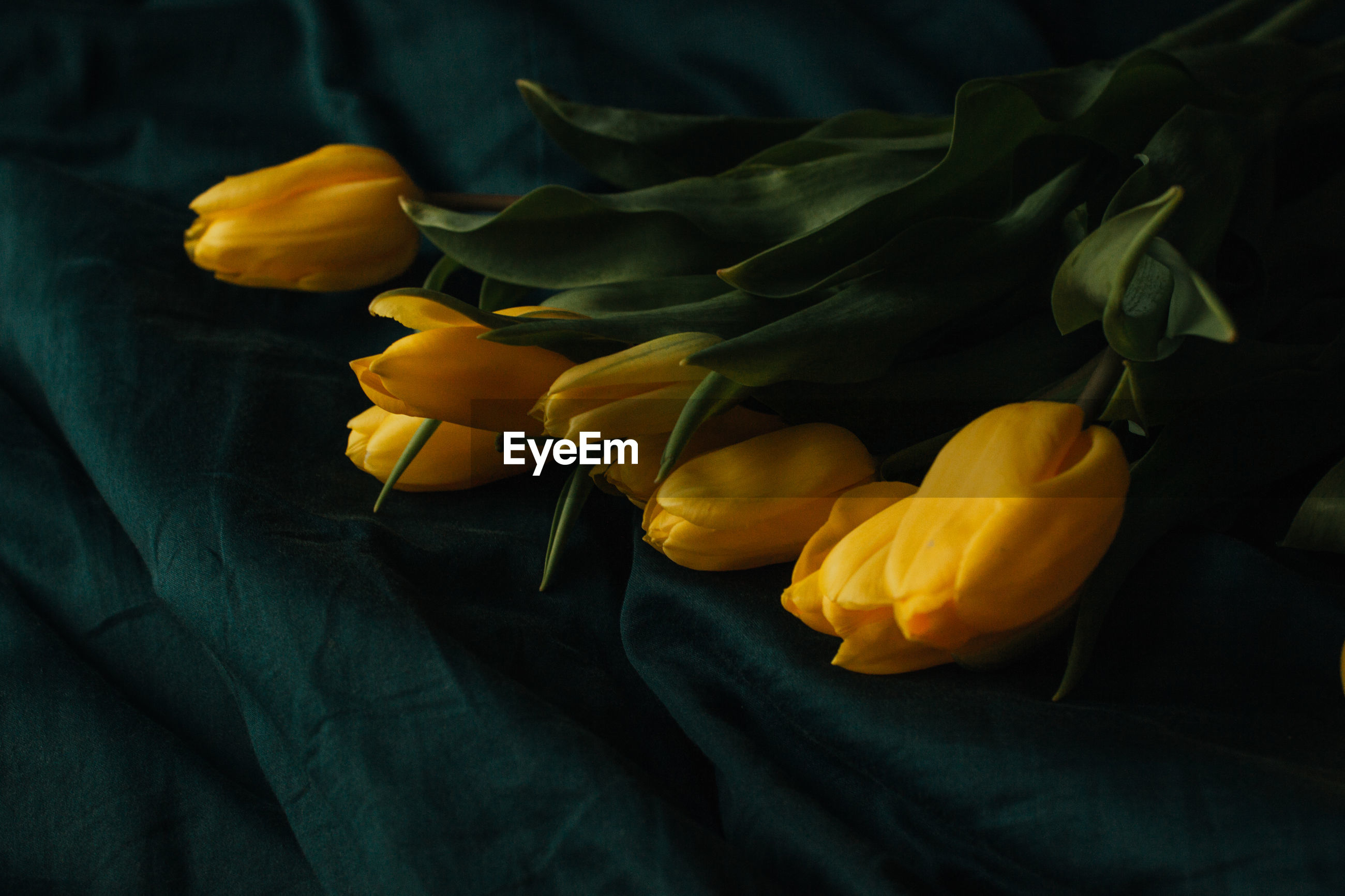 High angle view of yellow rose on bed