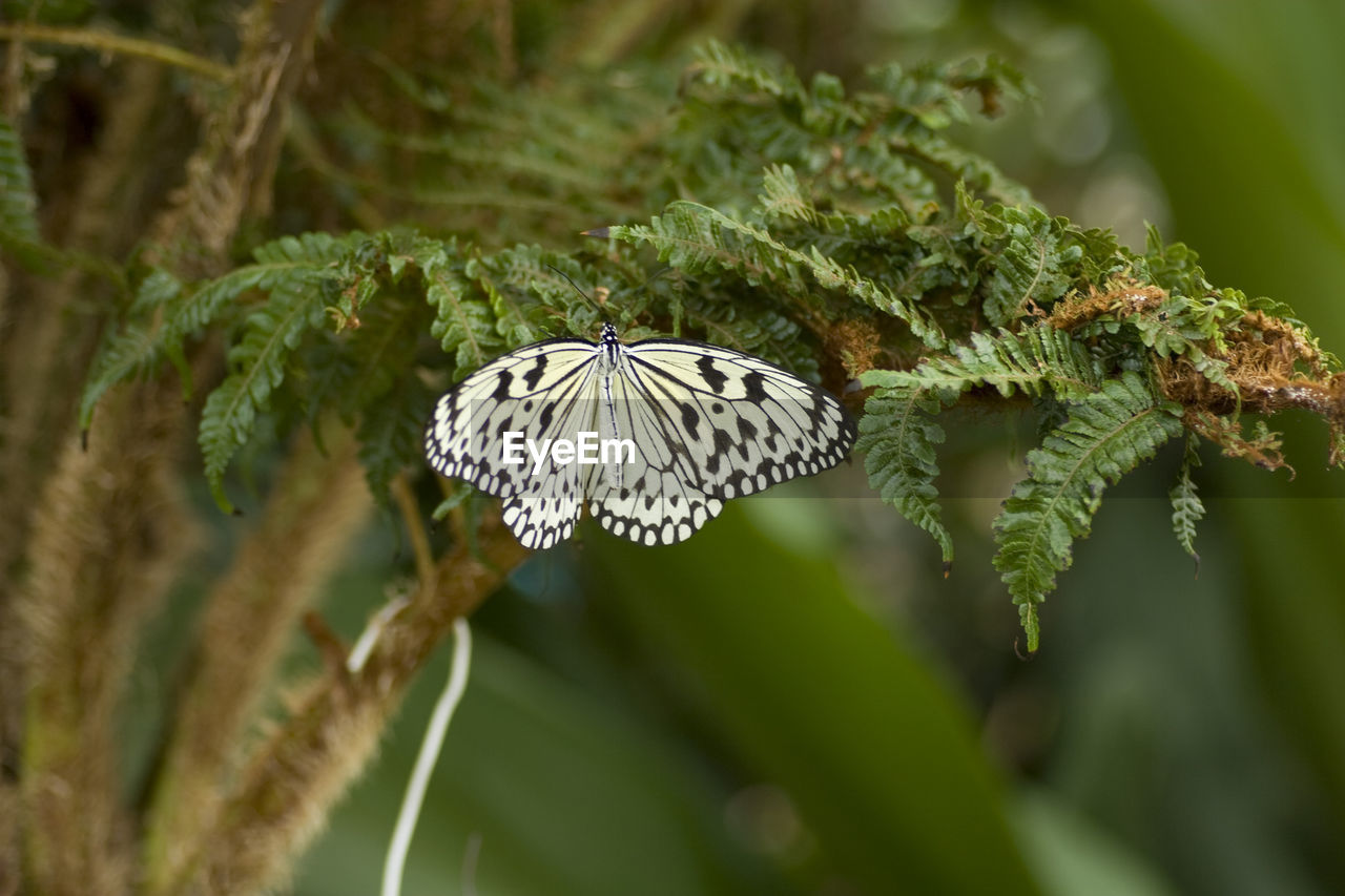 insect, animal themes, one animal, animals in the wild, nature, growth, beauty in nature, close-up, butterfly - insect, day, animal wildlife, plant, no people, green color, fragility, outdoors, leaf, freshness