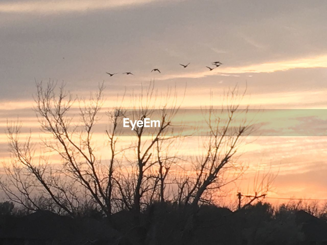 sunset, flying, bird, silhouette, nature, beauty in nature, sky, animals in the wild, animal themes, tranquil scene, scenics, animal wildlife, no people, tranquility, outdoors, cloud - sky, mid-air, flock of birds, water, spread wings, tree, day