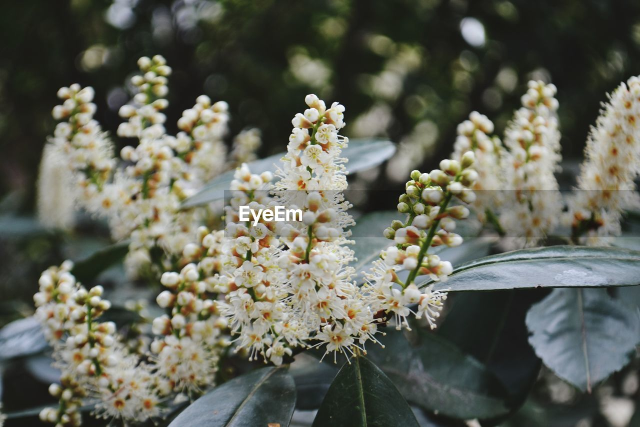 flower, growth, nature, beauty in nature, fragility, focus on foreground, day, outdoors, no people, freshness, plant, close-up, blooming, flower head
