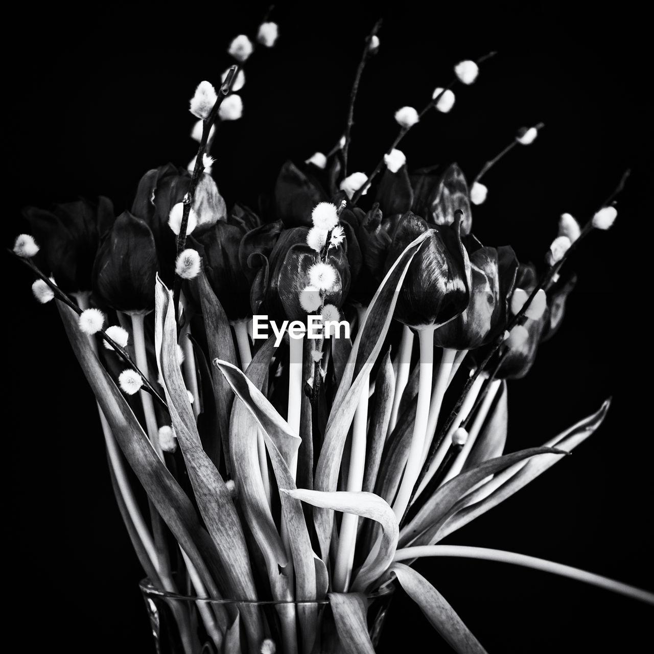 Close-up of flower vase over black background