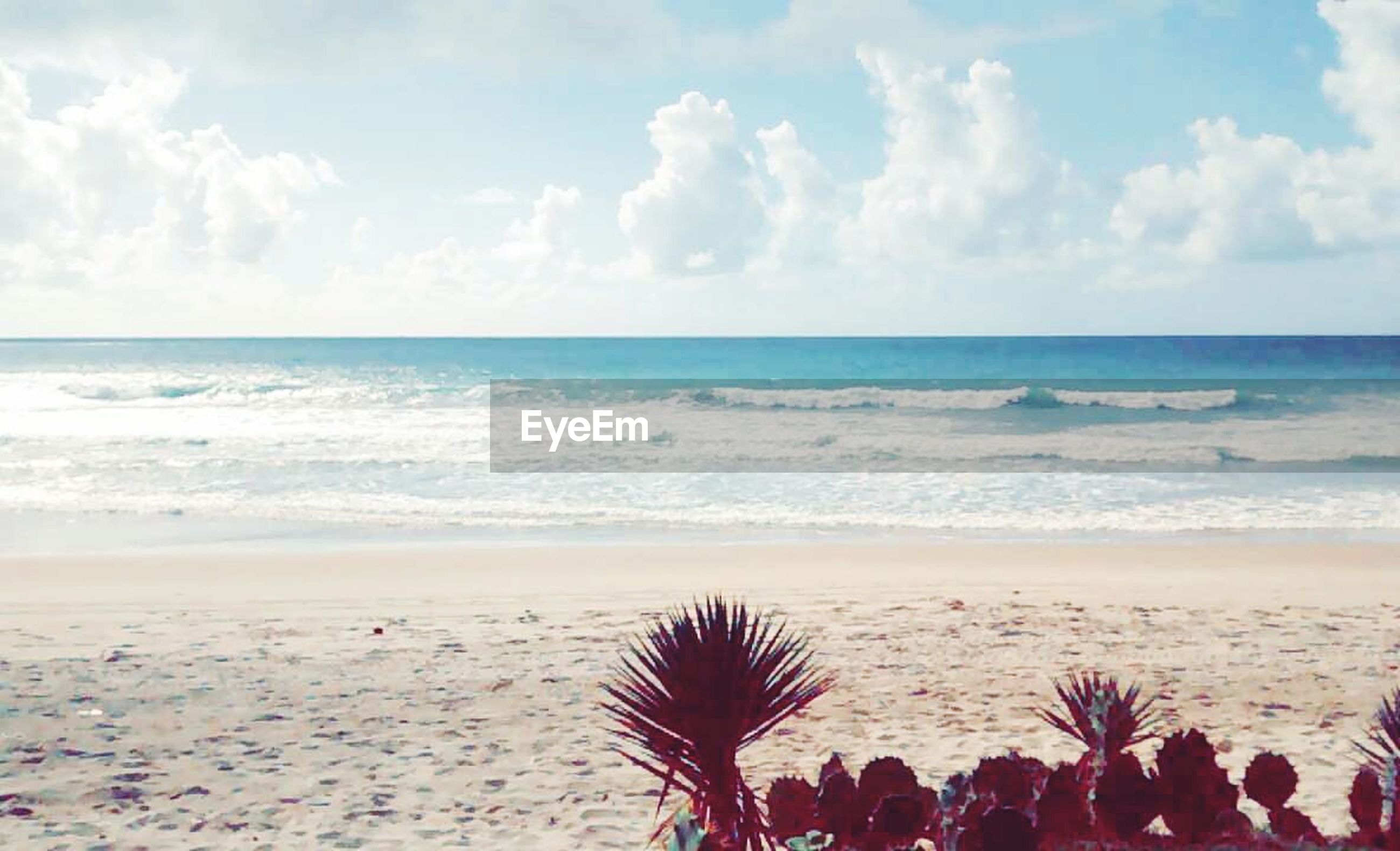 sea, horizon over water, beach, sky, shore, water, beauty in nature, scenics, tranquil scene, sand, tranquility, cloud - sky, nature, palm tree, cloud, vacations, idyllic, incidental people, coastline, outdoors