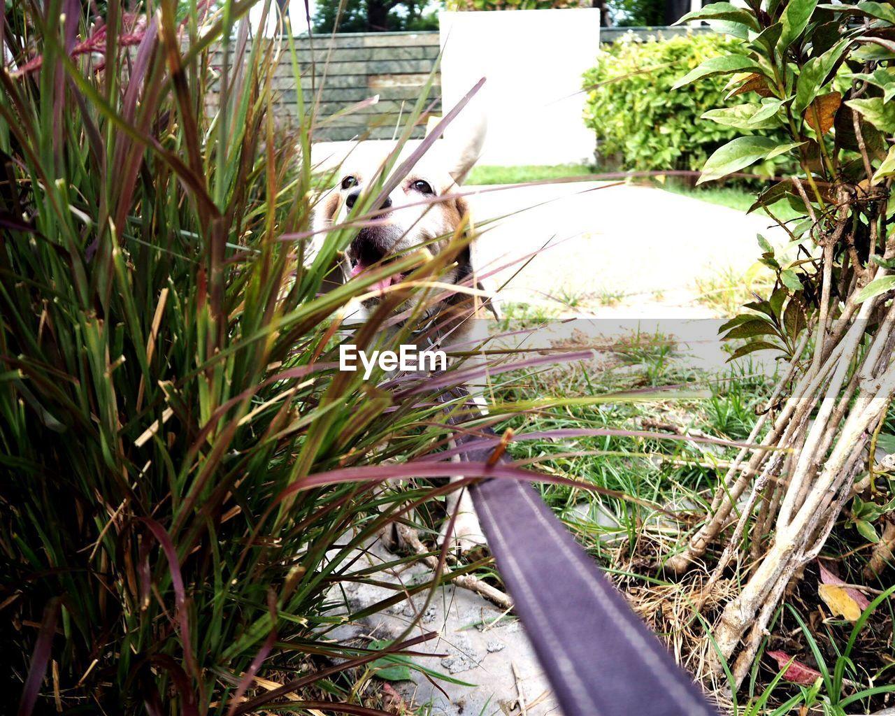 Close-up of dog leash