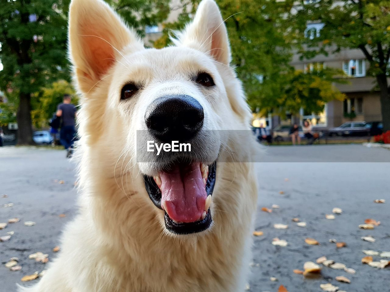 one animal, animal themes, animal, domestic, mammal, domestic animals, pets, dog, canine, focus on foreground, vertebrate, mouth, mouth open, close-up, city, portrait, street, day, looking at camera, no people, animal head
