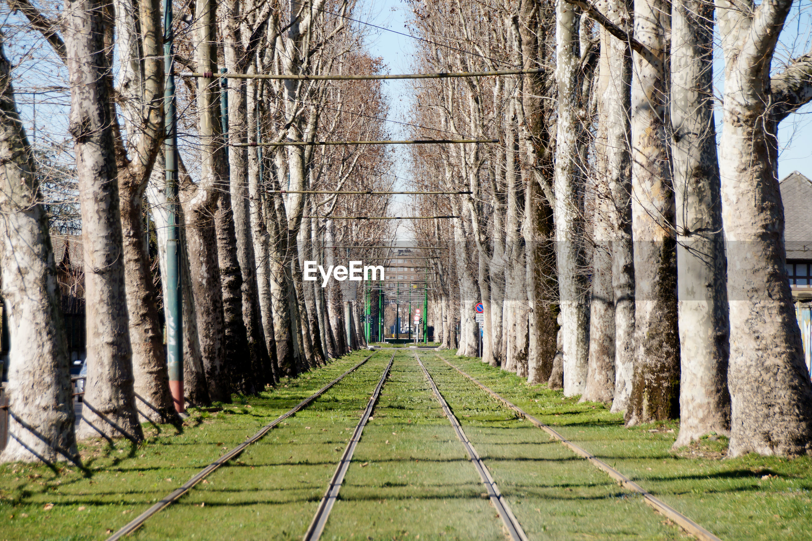 Railroad tracks amidst trees during sunny day