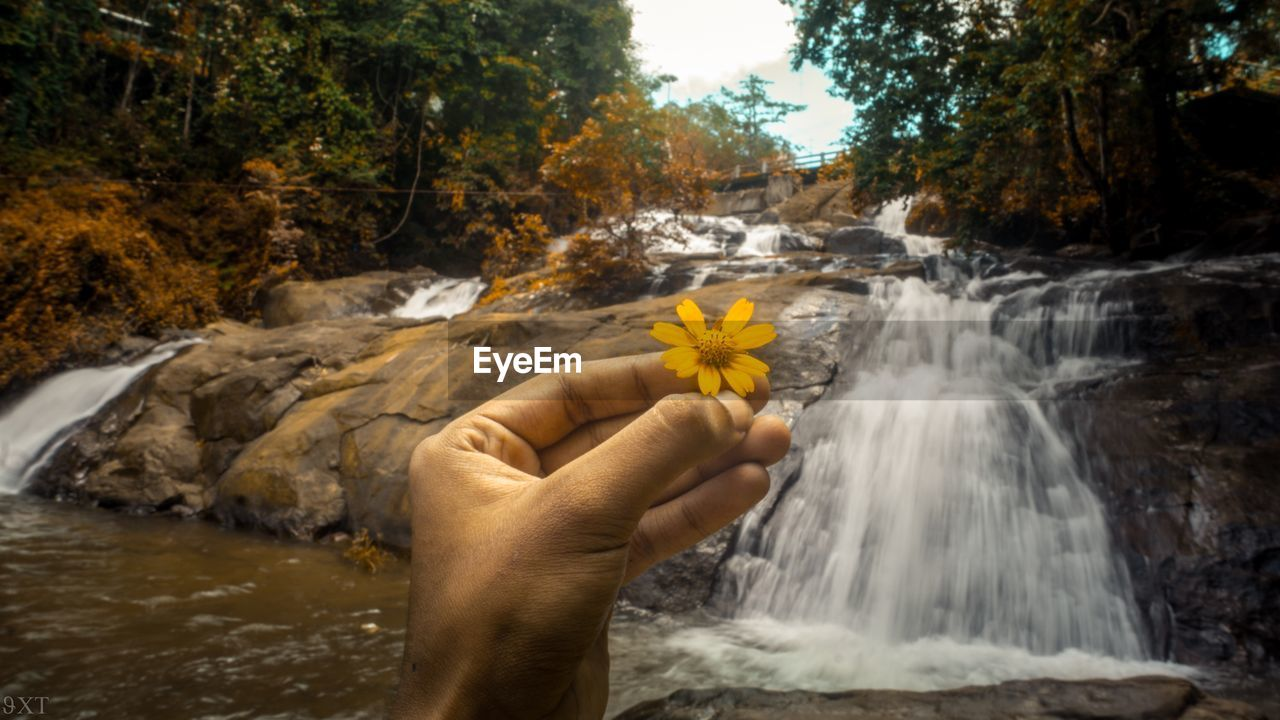 plant, human hand, hand, human body part, nature, flower, water, beauty in nature, one person, flowering plant, holding, freshness, tree, leisure activity, rock, unrecognizable person, lifestyles, day, body part, outdoors, flowing water, flower head, finger, hands cupped