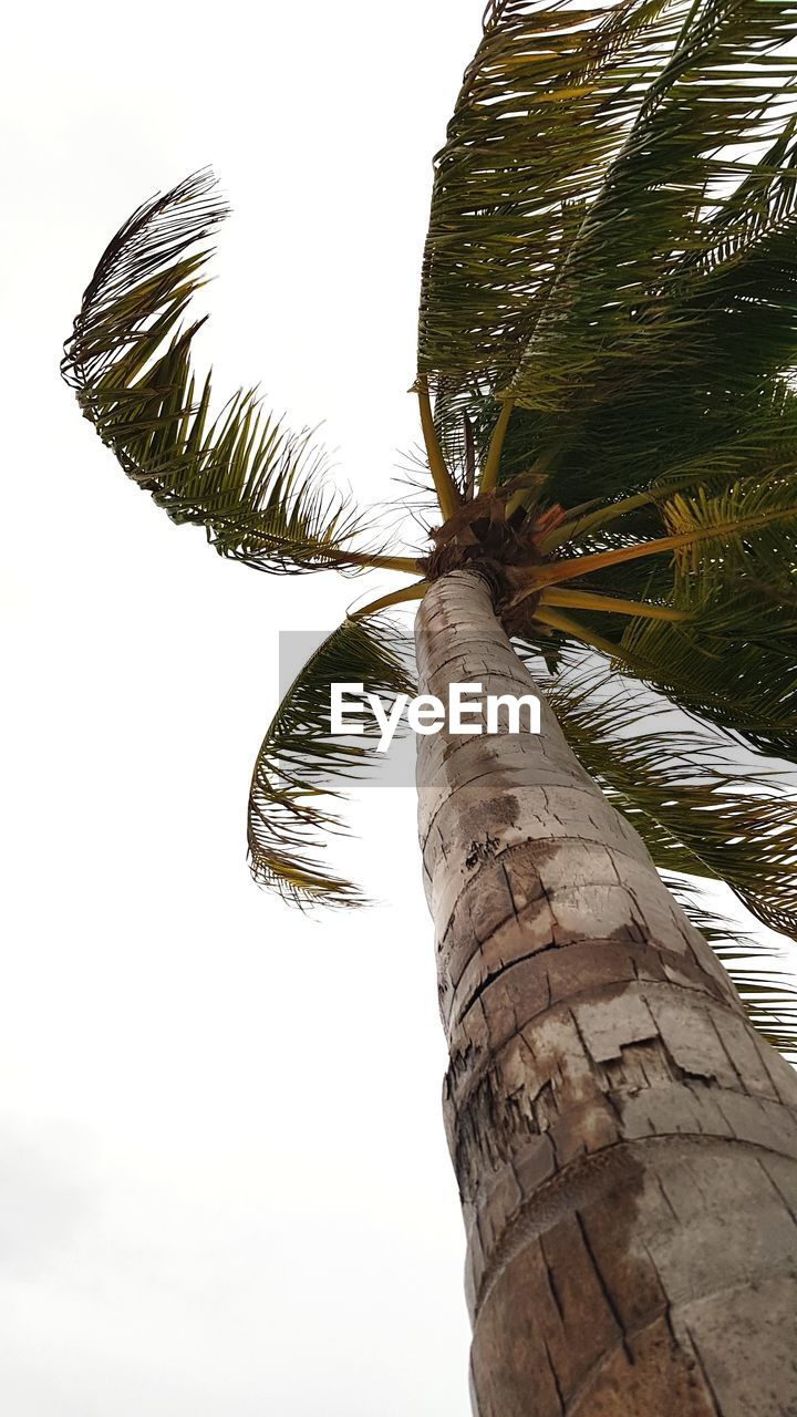 LOW ANGLE VIEW OF PALM TREE AGAINST THE SKY
