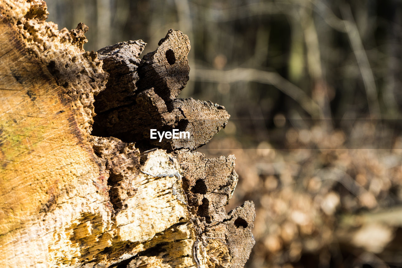 one animal, no people, animals in the wild, day, rock - object, focus on foreground, animal themes, close-up, sunlight, outdoors, nature, reptile, animal wildlife, tree stump, beauty in nature