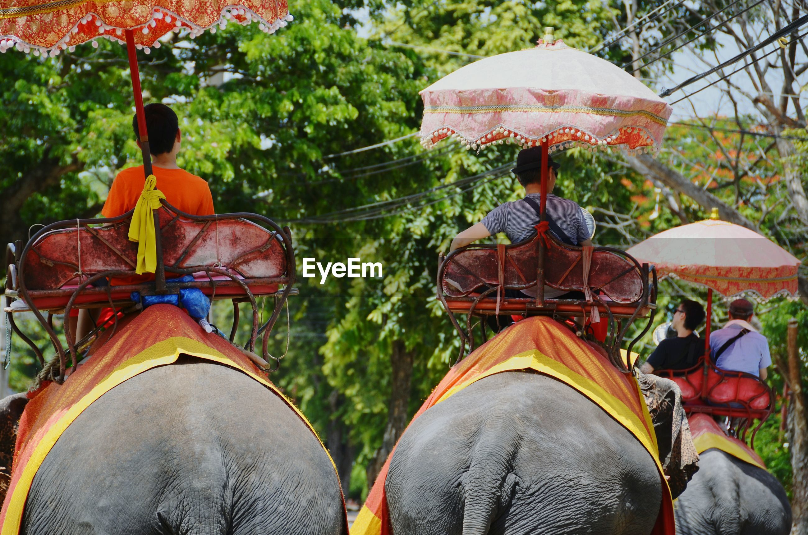 Rear view of people riding elephants