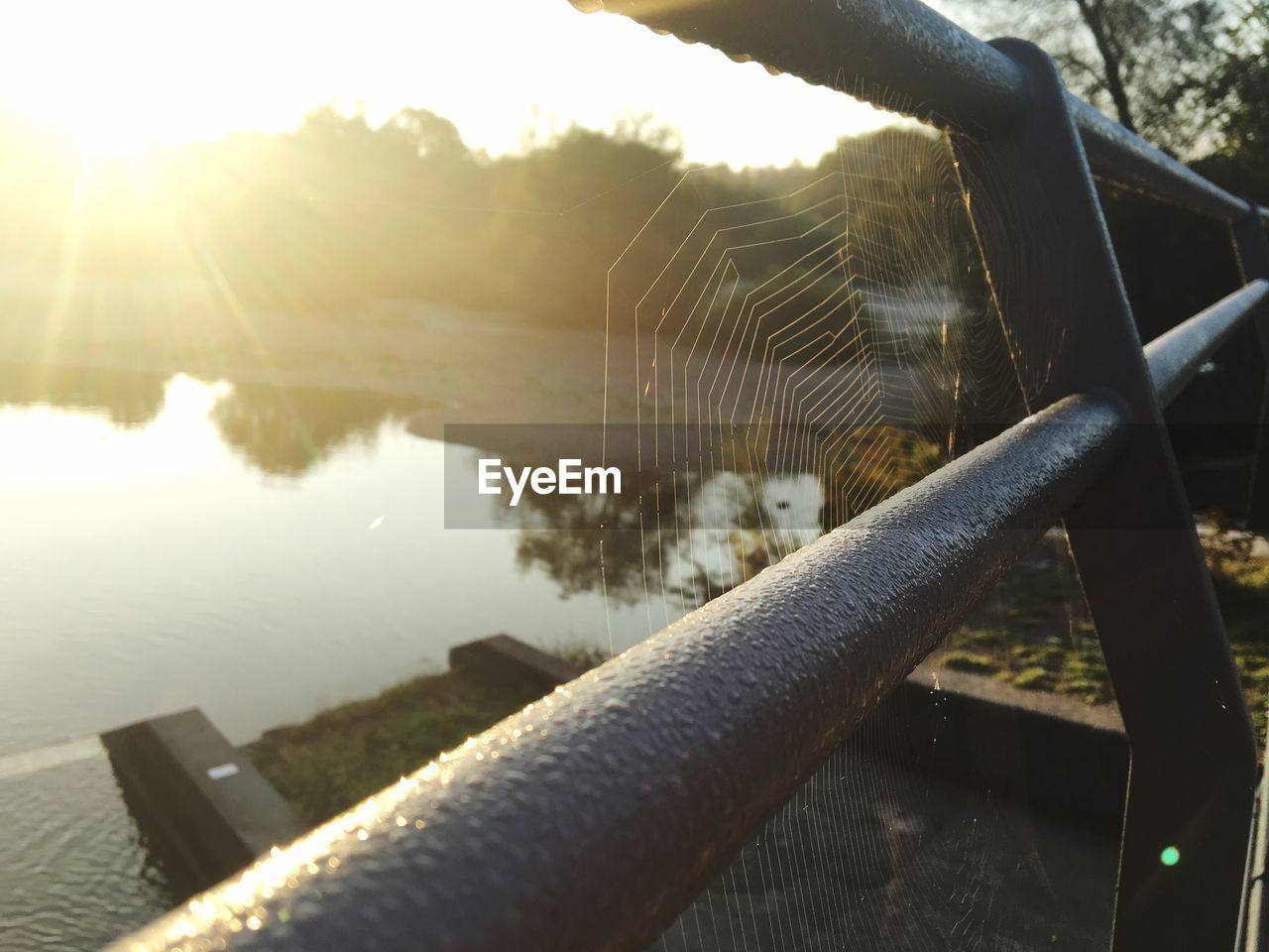 sunlight, nature, no people, day, close-up, water, outdoors, focus on foreground, animal, one animal, spider web, animal themes, metal, reflection, lake, railing, animals in the wild, sunbeam, beauty in nature