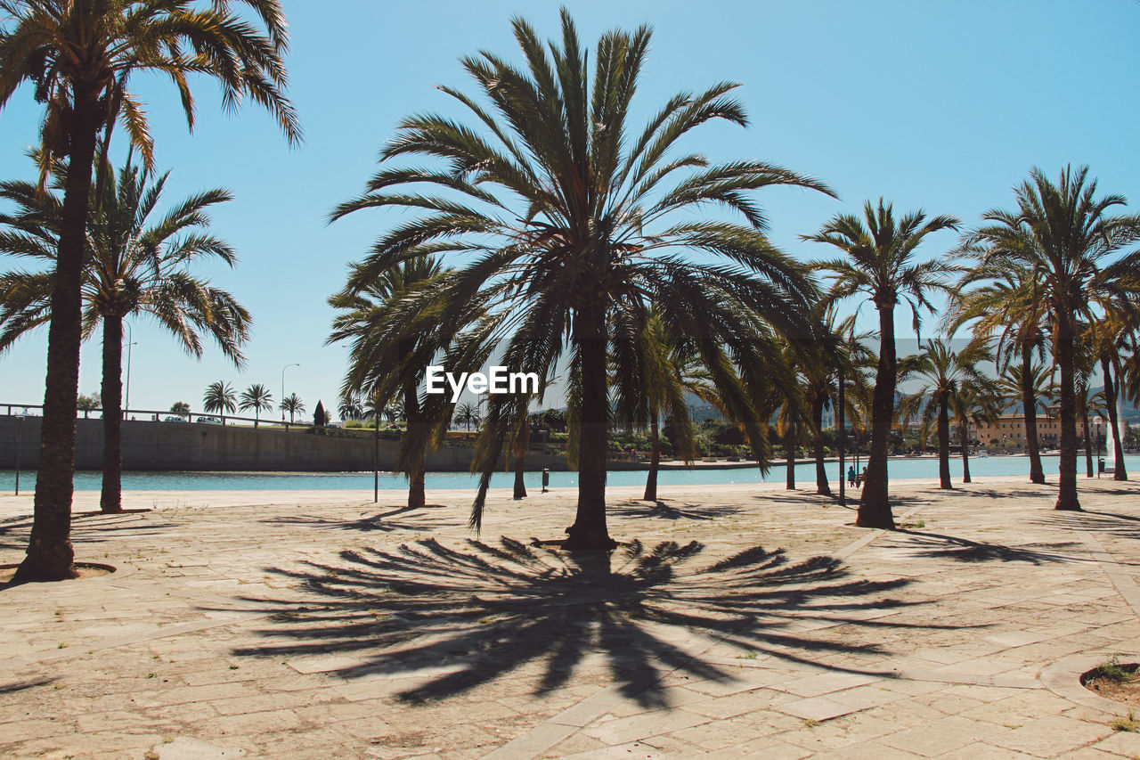 palm tree, beach, sand, tree, sea, outdoors, shadow, sunlight, beauty in nature, tranquil scene, day, nature, tranquility, scenics, no people, sky, growth, horizon over water, water