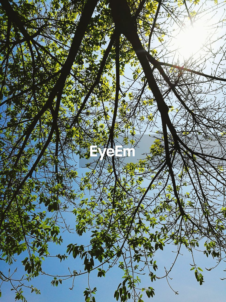 tree, low angle view, growth, nature, branch, day, beauty in nature, no people, outdoors, tranquility, sky, clear sky, freshness