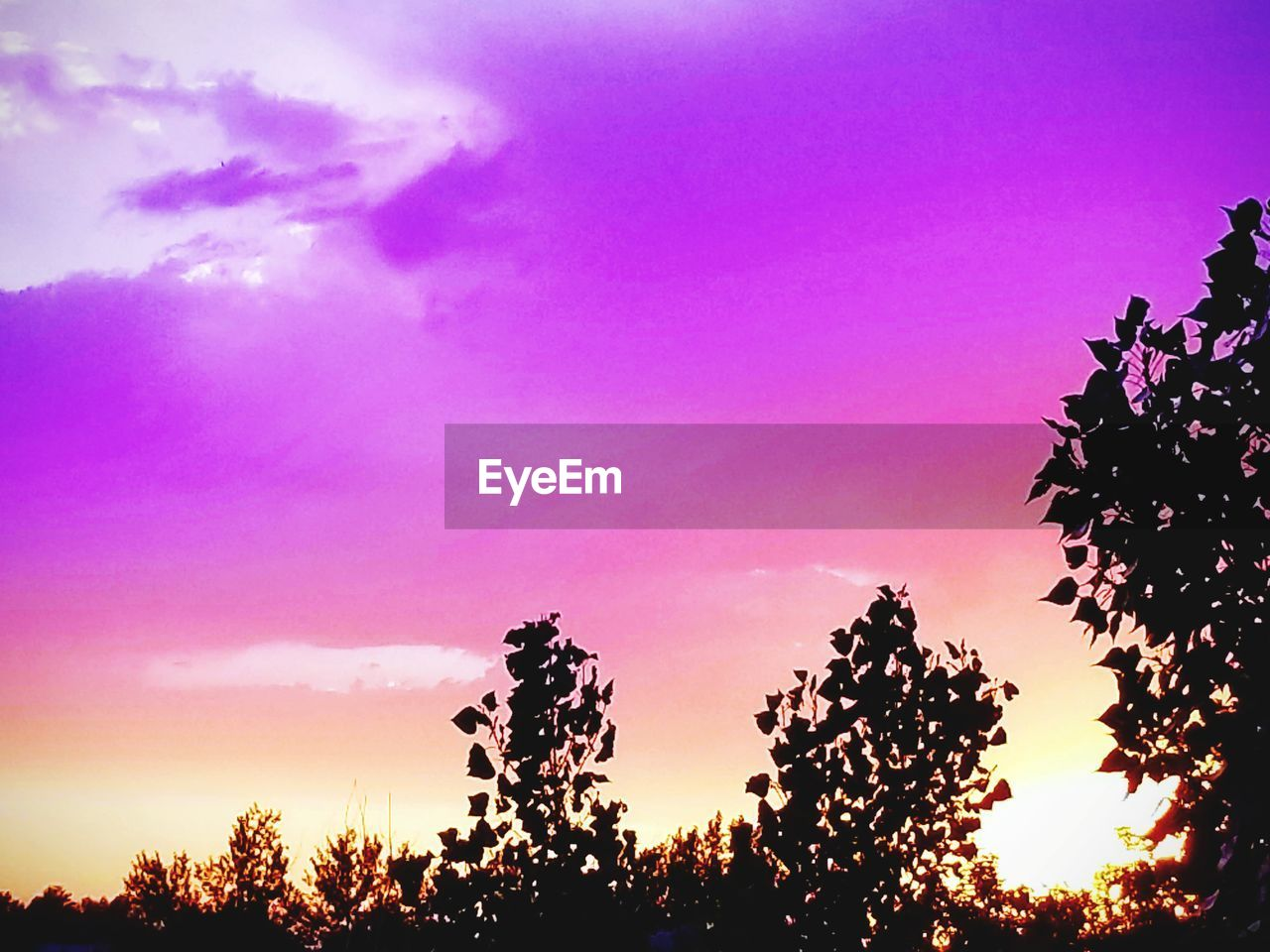 plant, sky, growth, tree, beauty in nature, sunset, tranquility, silhouette, pink color, nature, no people, scenics - nature, tranquil scene, cloud - sky, low angle view, outdoors, sunlight, orange color, idyllic, day, purple, romantic sky