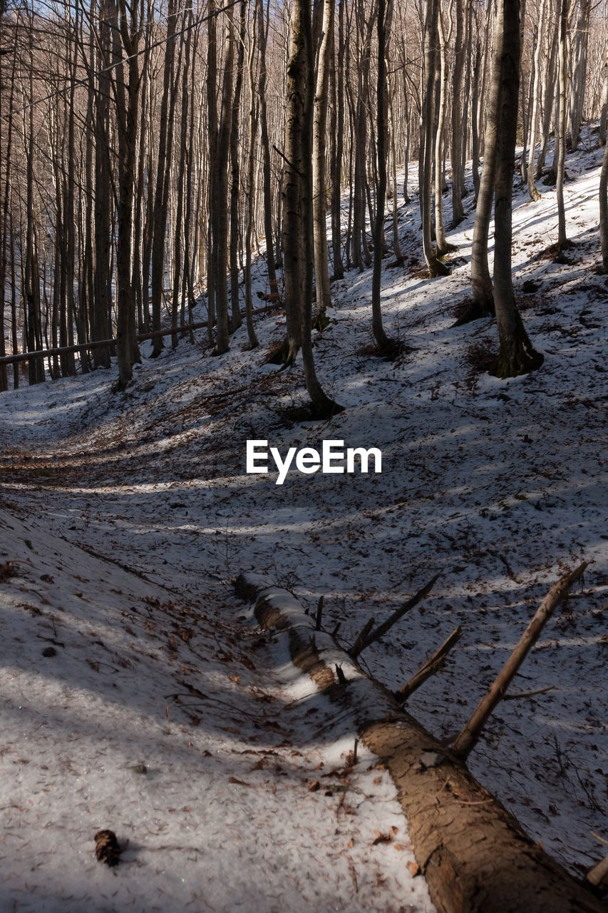 tree, forest, tree trunk, nature, winter, tranquility, day, woodland, outdoors, tranquil scene, no people, scenics, beauty in nature, landscape, snow, branch
