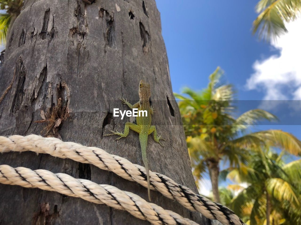 tree, low angle view, focus on foreground, nature, no people, day, sky, plant, trunk, tree trunk, palm tree, close-up, outdoors, sunlight, tropical climate, rope, textured, wood - material, growth, art and craft