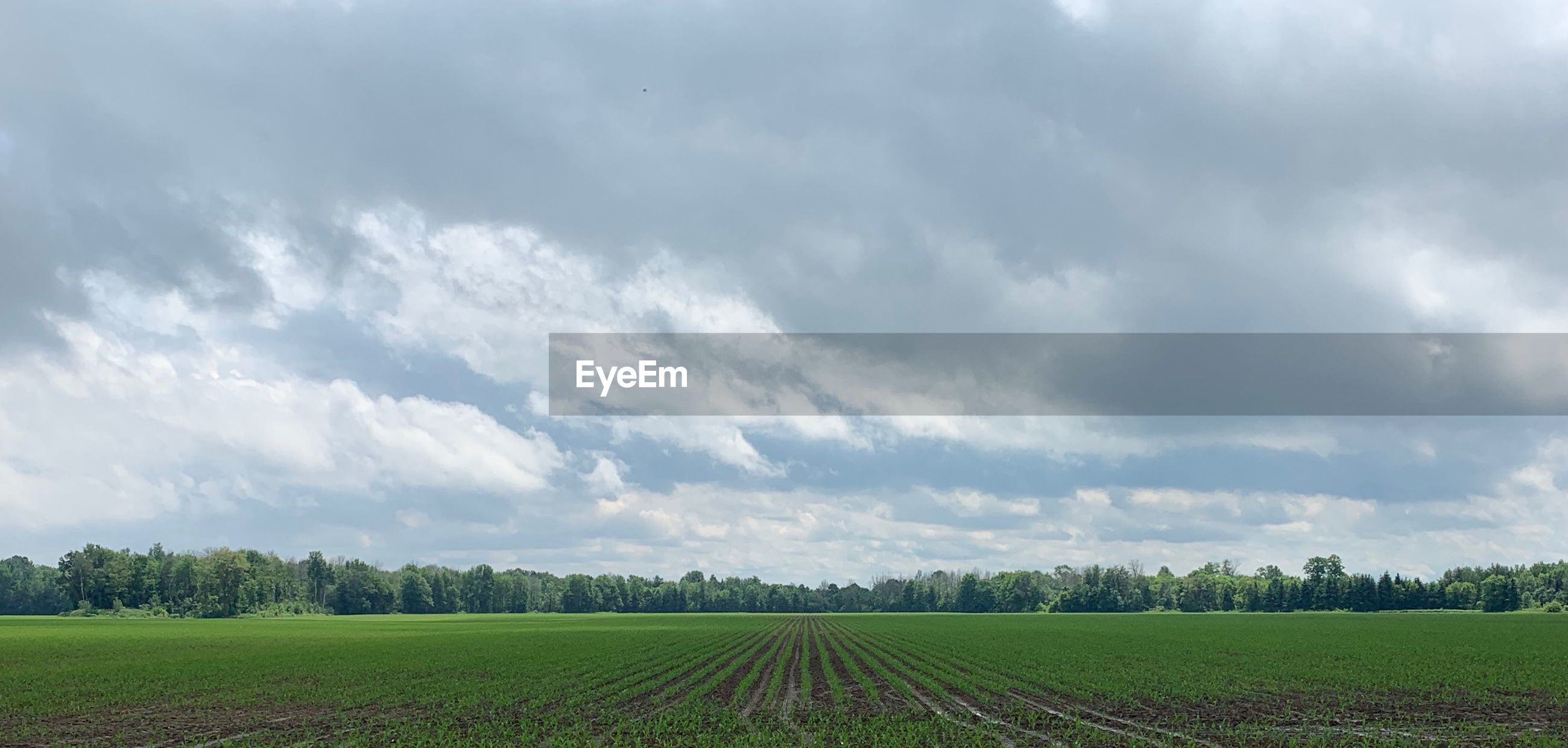 SCENIC VIEW OF FARMS AGAINST SKY