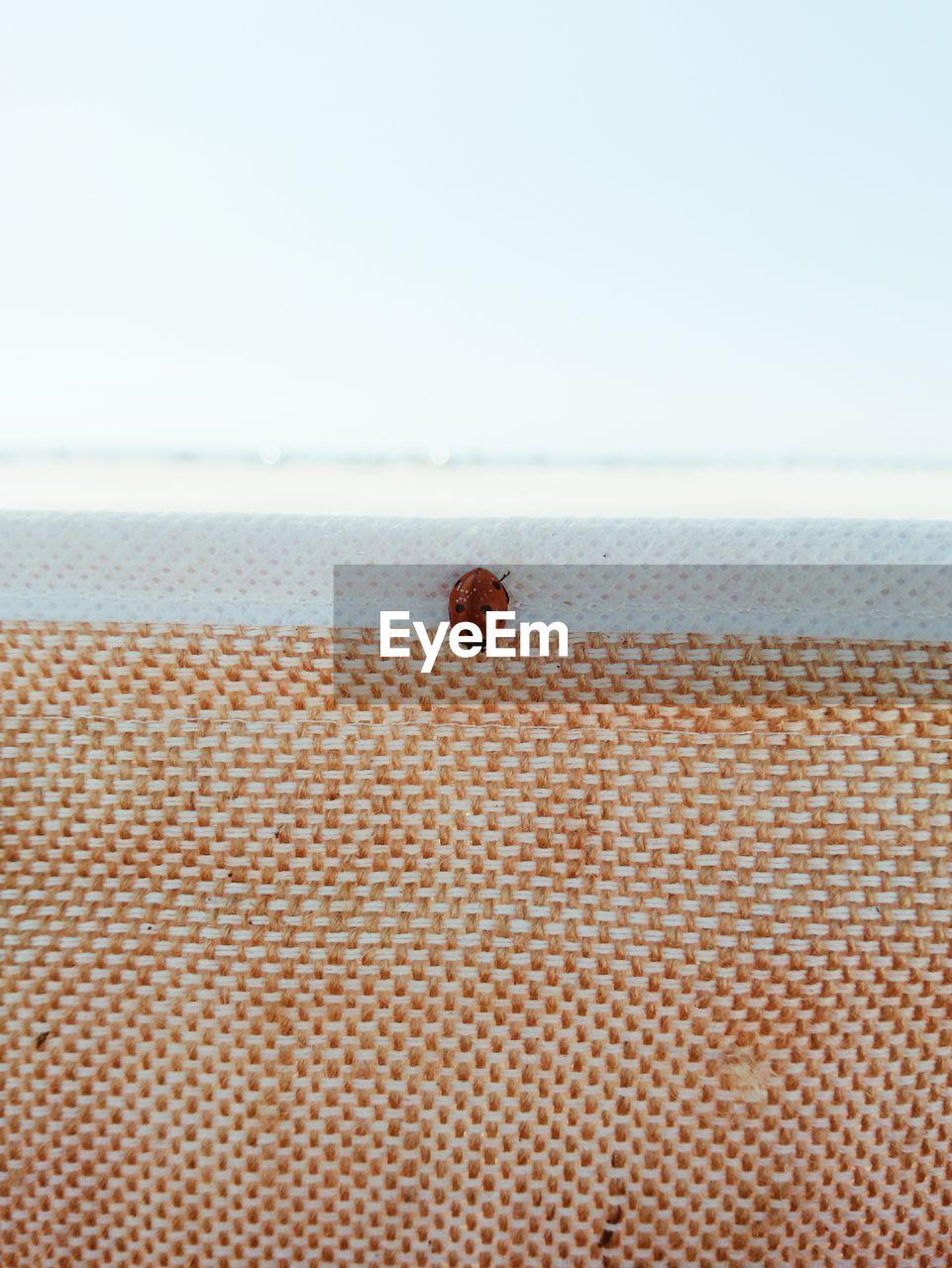Ladybug On Textile