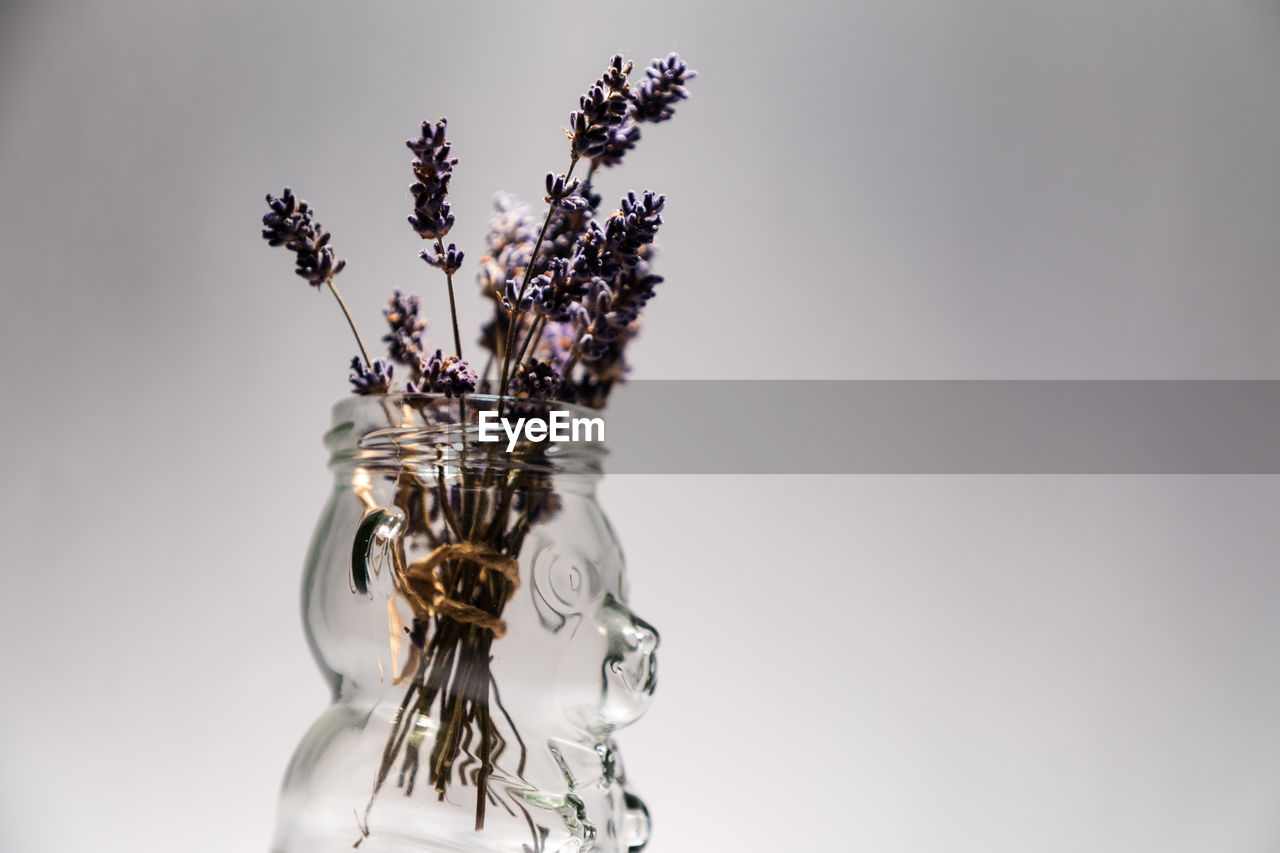 studio shot, indoors, flower, glass - material, flowering plant, close-up, still life, no people, jar, transparent, copy space, plant, container, nature, vase, freshness, white background, fragility, vulnerability, decoration