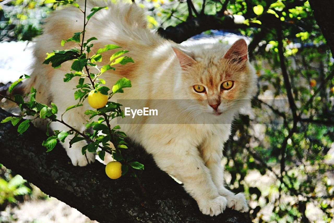 mammal, domestic, pets, domestic animals, domestic cat, cat, feline, vertebrate, one animal, portrait, plant, looking at camera, day, nature, no people, sitting, tree, whisker