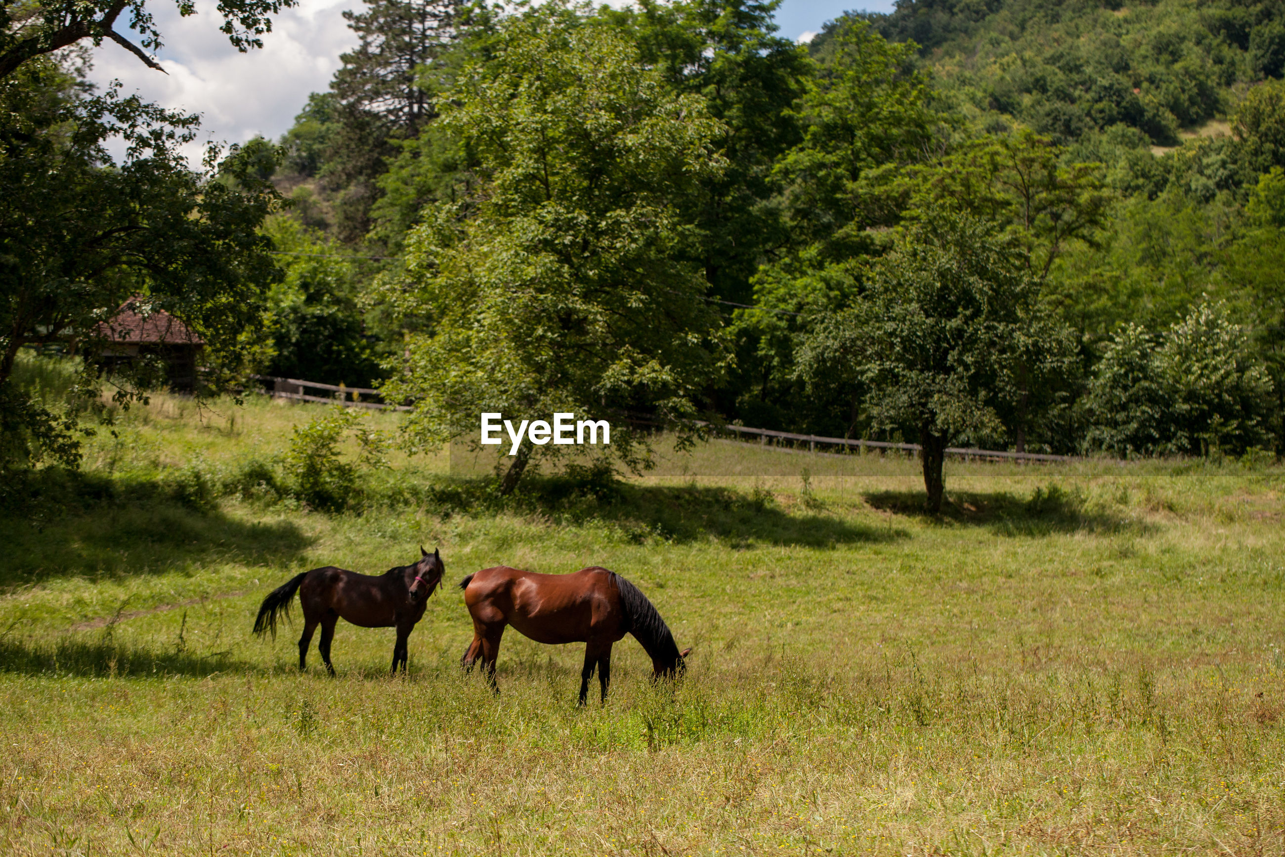 Side view of horses on grassy field against trees