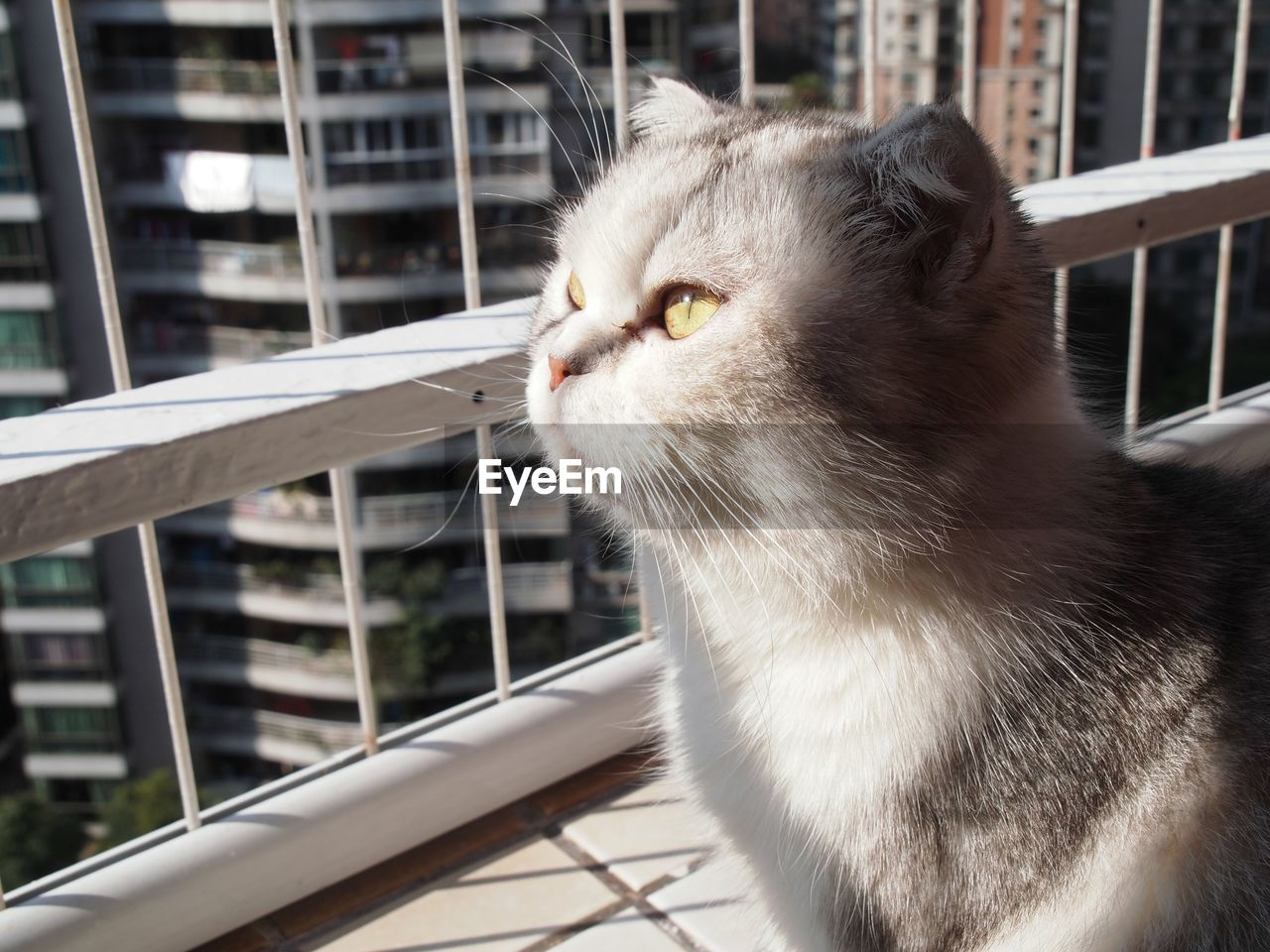 Close-Up Of Cat Looking Away From Balcony
