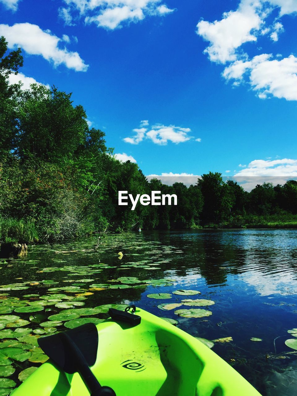 water, tranquility, floating on water, nature, beauty in nature, lake, sky, tree, outdoors, day, tranquil scene, scenics, no people, cloud - sky, lily pad, growth