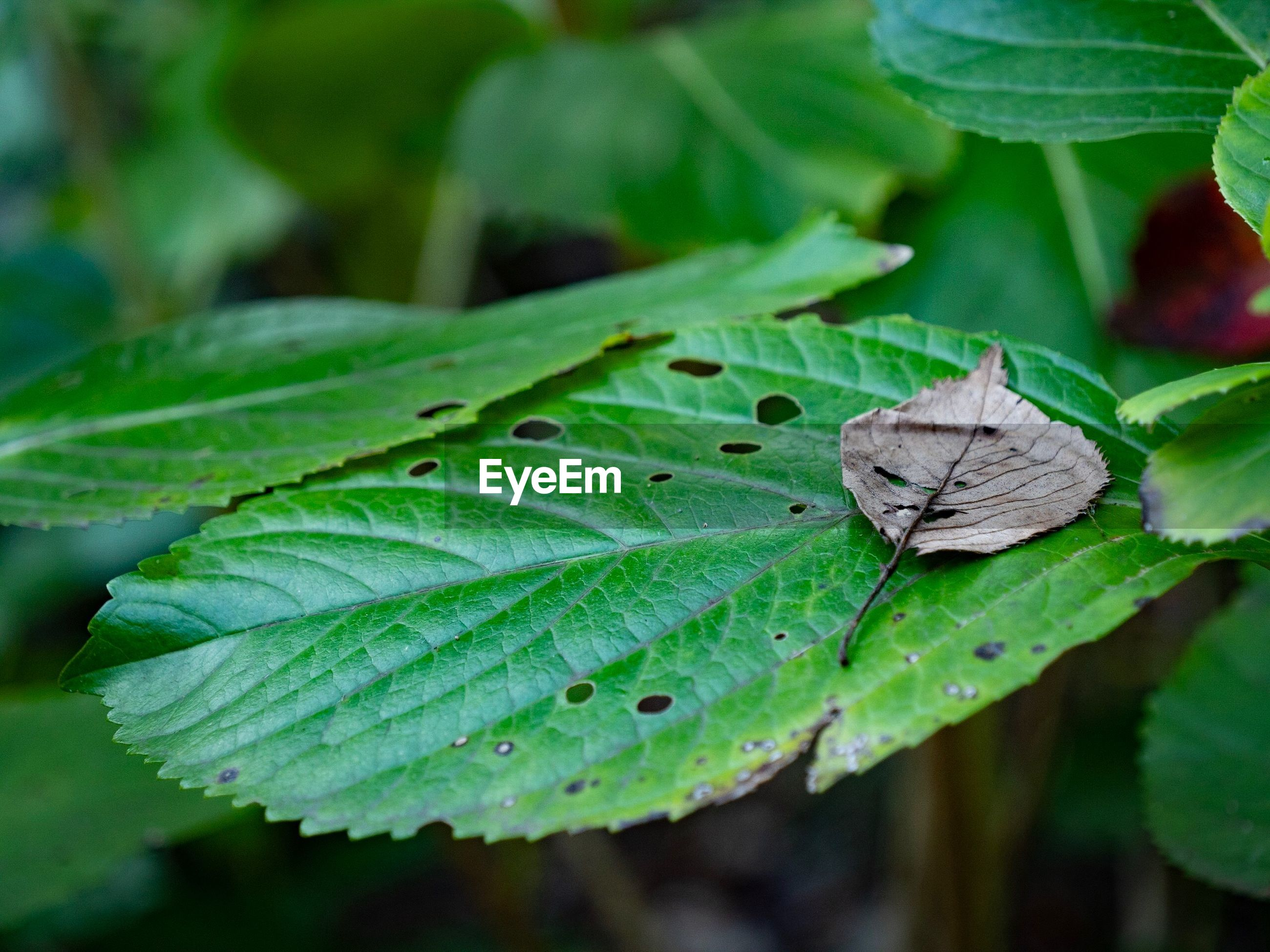 CLOSE-UP OF BUTTERFLY ON PLANT LEAVES