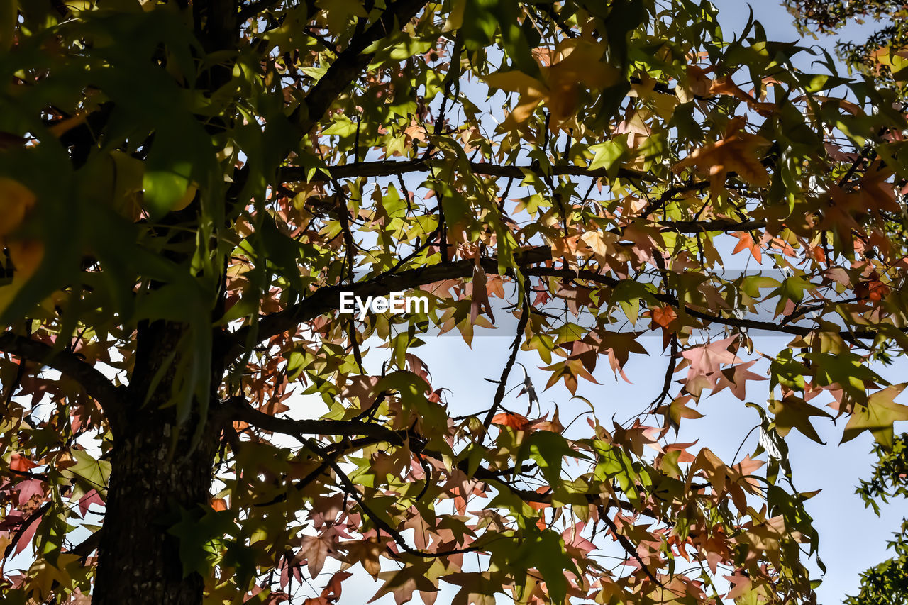 tree, branch, growth, leaf, nature, low angle view, beauty in nature, day, outdoors, no people, fragility, scenics, backgrounds, autumn, freshness, flower, sky, close-up