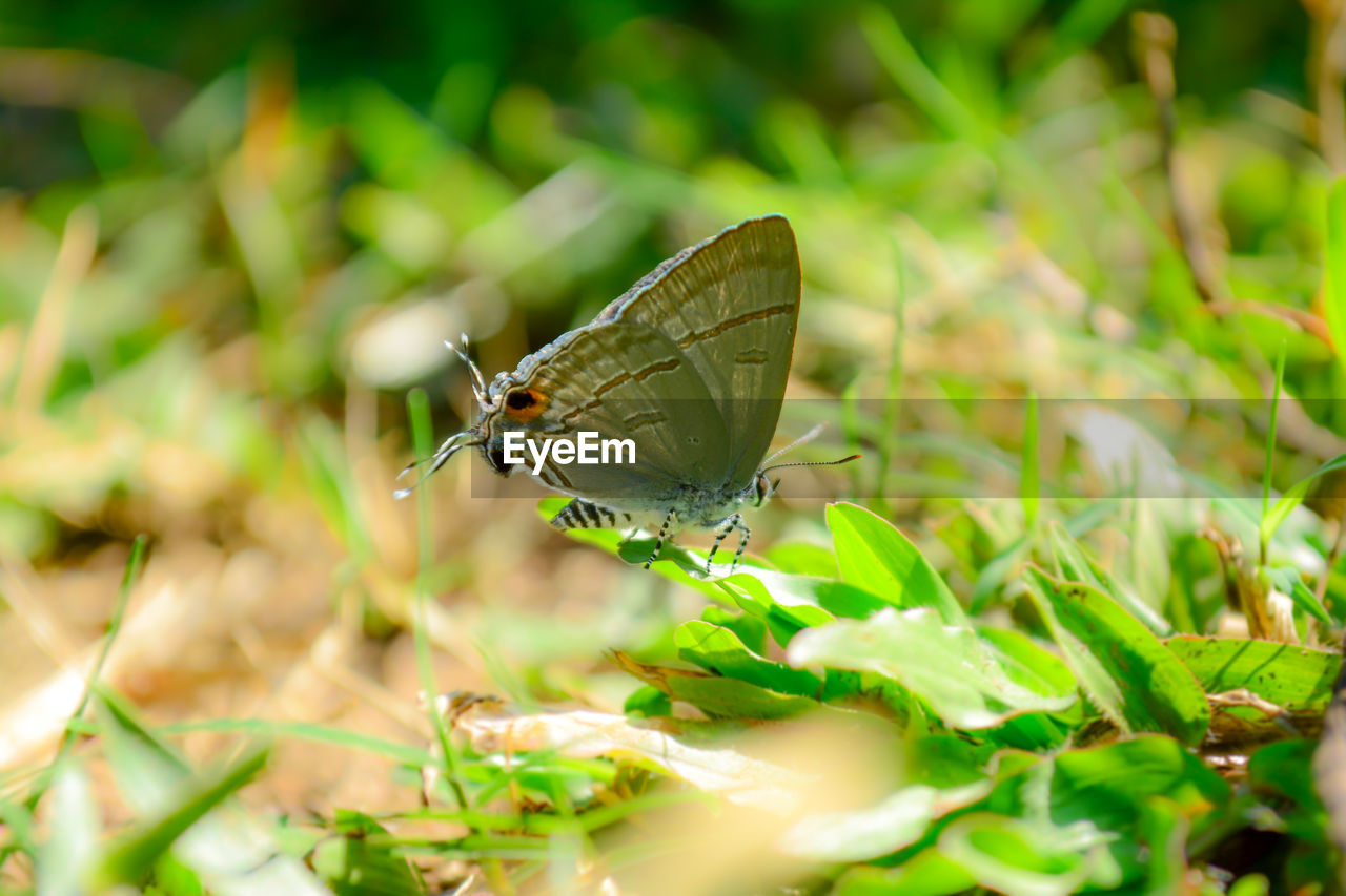 insect, invertebrate, animal wildlife, animals in the wild, animal themes, one animal, animal, animal wing, plant, green color, plant part, nature, no people, leaf, beauty in nature, day, selective focus, close-up, growth, butterfly - insect, butterfly, pollination