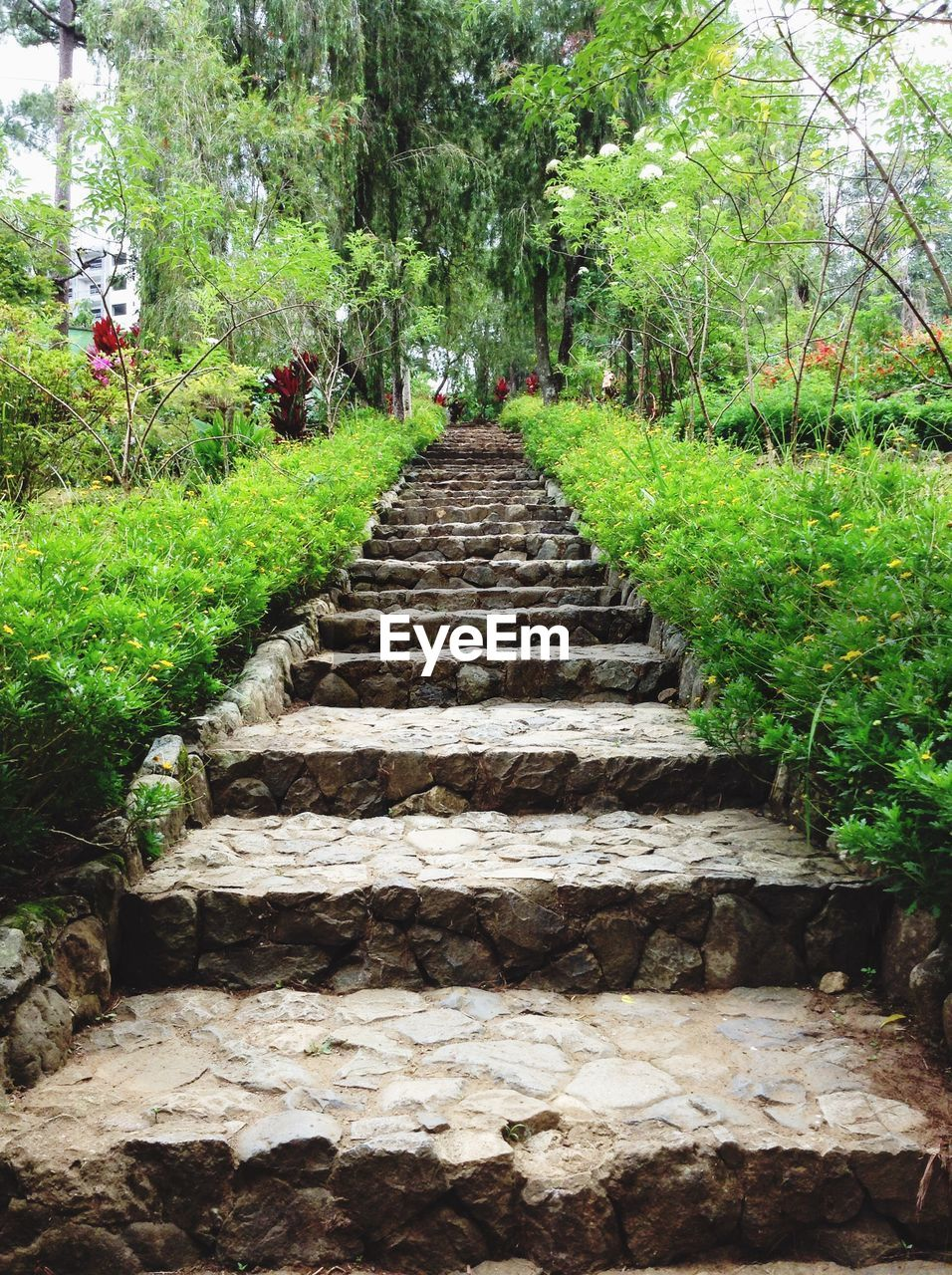 tree, growth, nature, steps, the way forward, plant, day, beauty in nature, tranquility, outdoors, steps and staircases, green color, tranquil scene, no people, grass