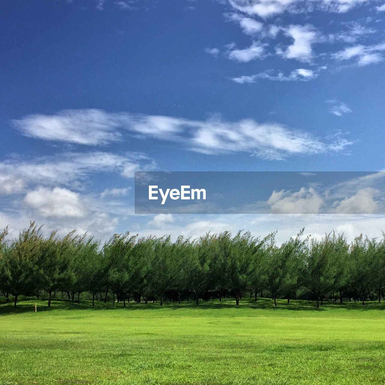 Trees on grassy field against sky
