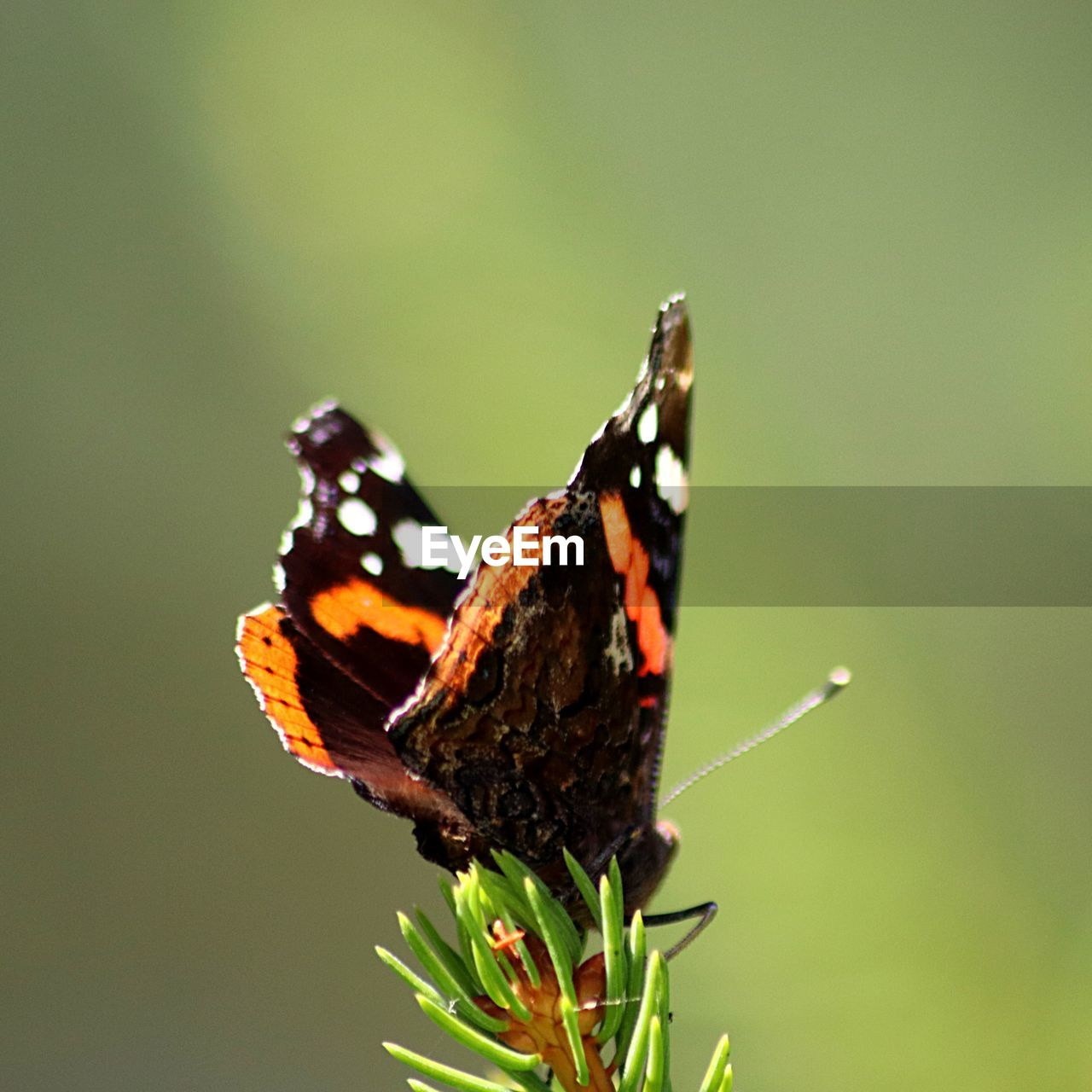 animal themes, animal, animal wildlife, animals in the wild, one animal, insect, invertebrate, beauty in nature, butterfly - insect, plant, focus on foreground, close-up, animal wing, no people, flower, nature, day, green color, vulnerability, fragility, butterfly, outdoors, pollination