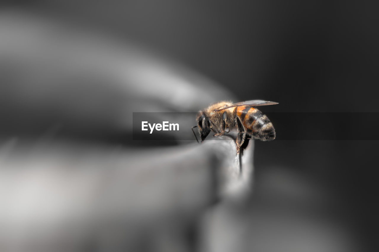 invertebrate, insect, animal themes, animal, one animal, animal wildlife, animals in the wild, close-up, selective focus, animal wing, no people, fly, arthropod, zoology, day, outdoors, bee, housefly, animal body part