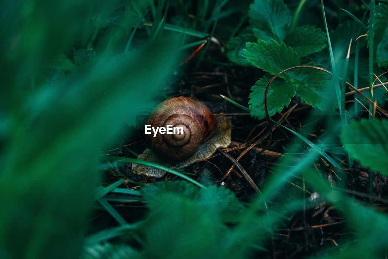 mollusk, animal, animal themes, gastropod, snail, invertebrate, animal wildlife, shell, one animal, animals in the wild, plant, selective focus, nature, plant part, leaf, animal shell, no people, close-up, green color, spiral