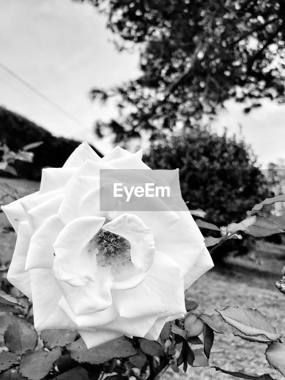 flower, petal, growth, fragility, outdoors, no people, nature, tree, day, plant, close-up, beauty in nature, flower head, freshness, sky