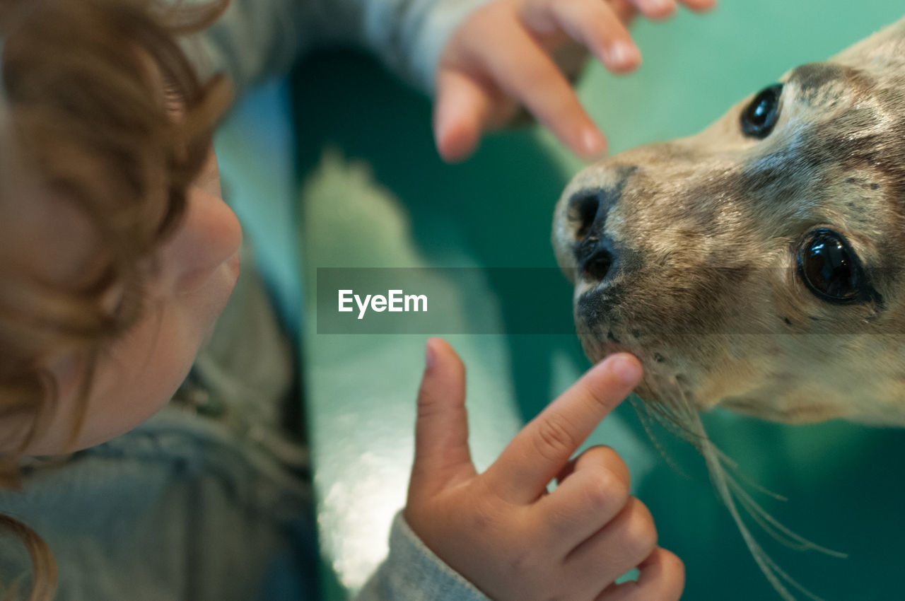Cropped image of boy touching seal in zoo